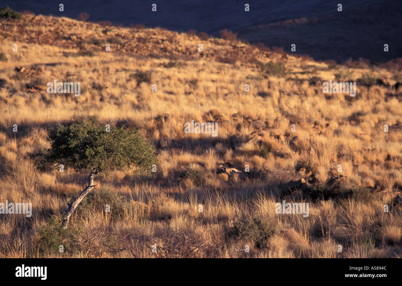 Dawn view from near Klein Aub Namibgrens on the back road fom Rehoboth to Sesriem Namibia - Stock Image