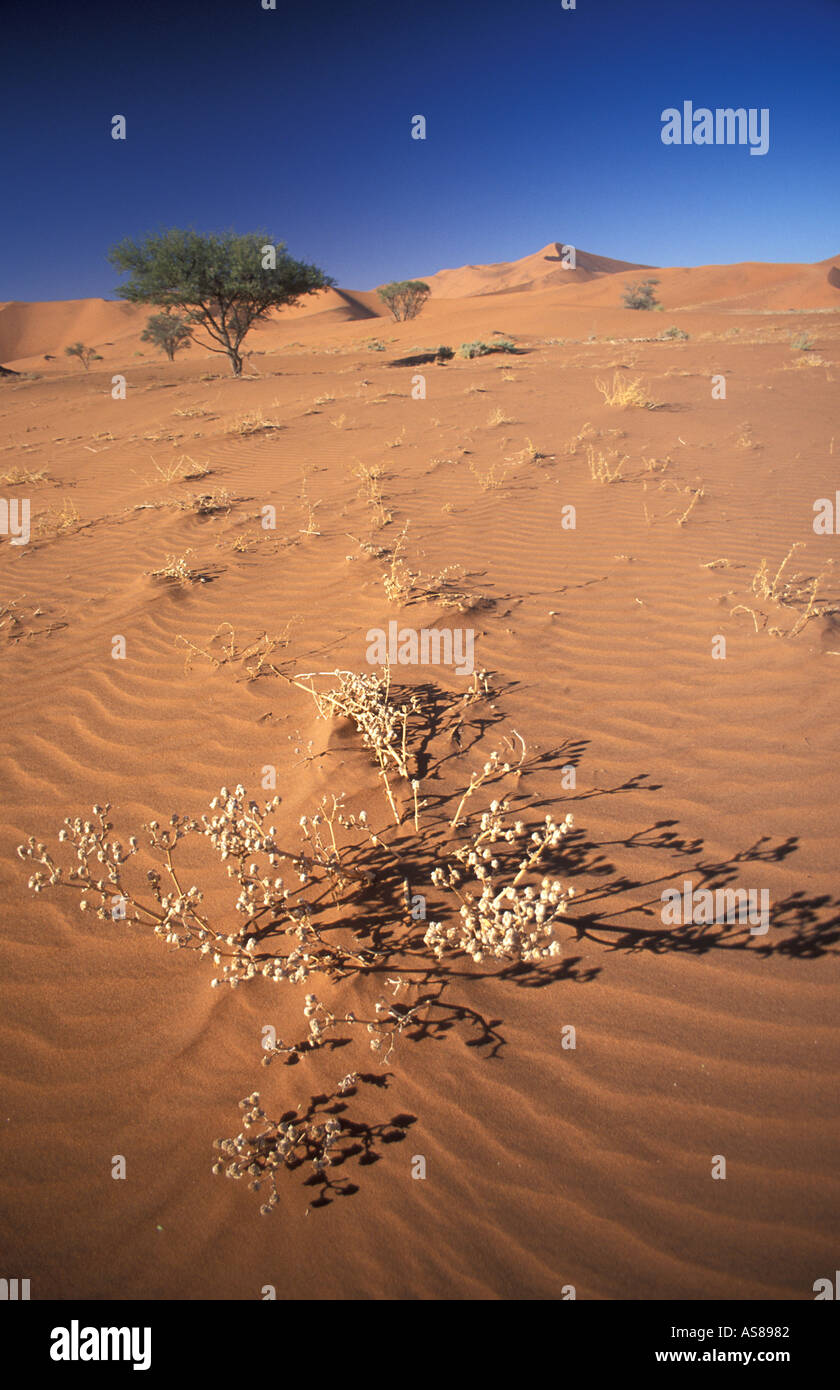 Sand dunes and desert Namib Naukluft National Park a walk from the 4x4 road to Sossusvlei Namibia - Stock Image