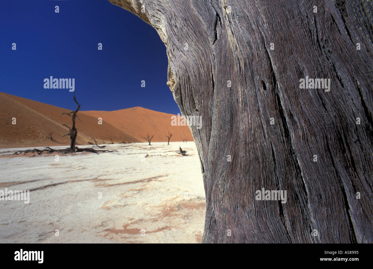 Sand dunes and dessicated acacia trees on a salt pan Dead Vlei Namib Naukluft National Park Sossusvlei area Namibia - Stock Image