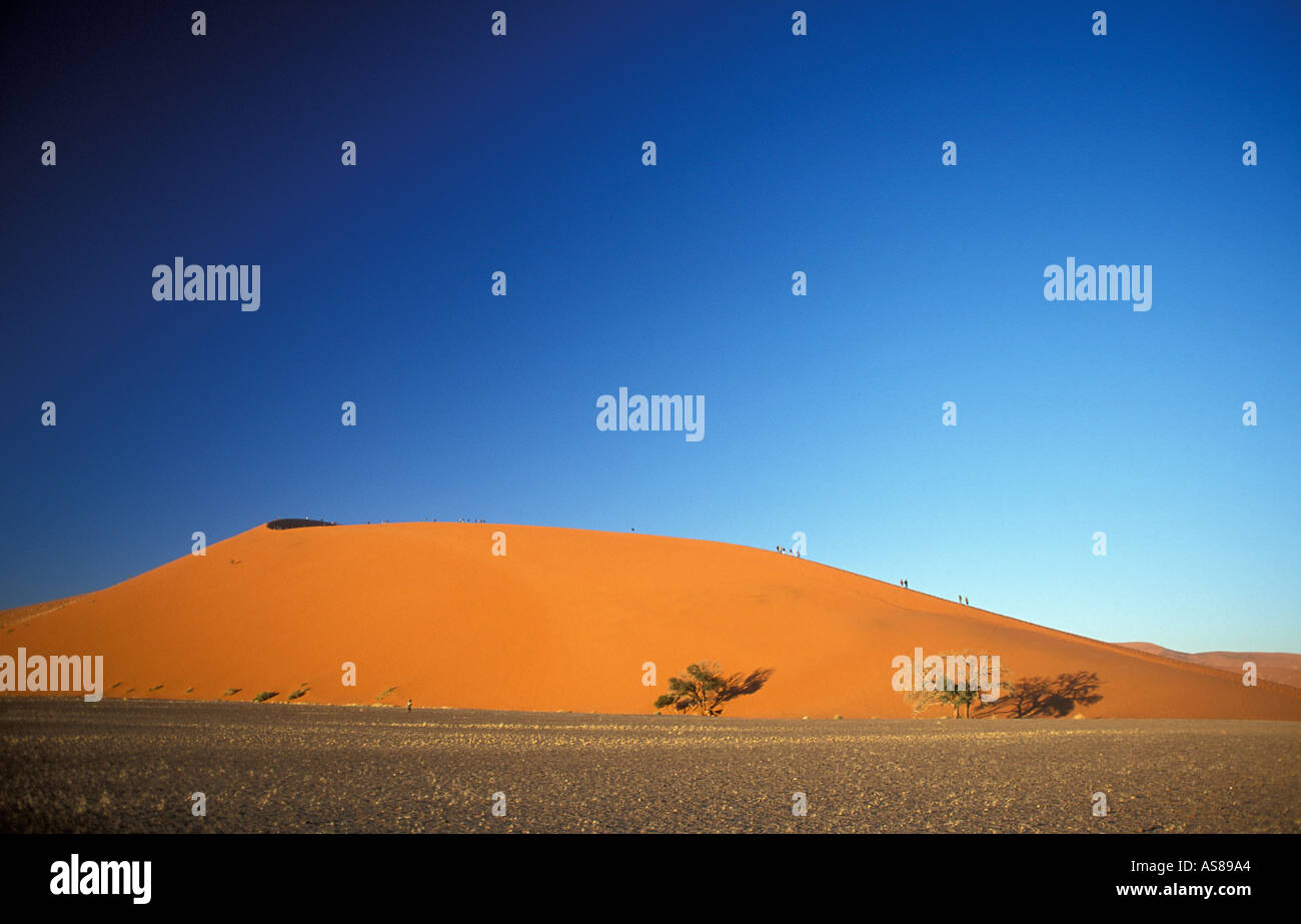 Early morning sun lights Dune 45 a golden red Namib Naukluft National Park Namibia - Stock Image