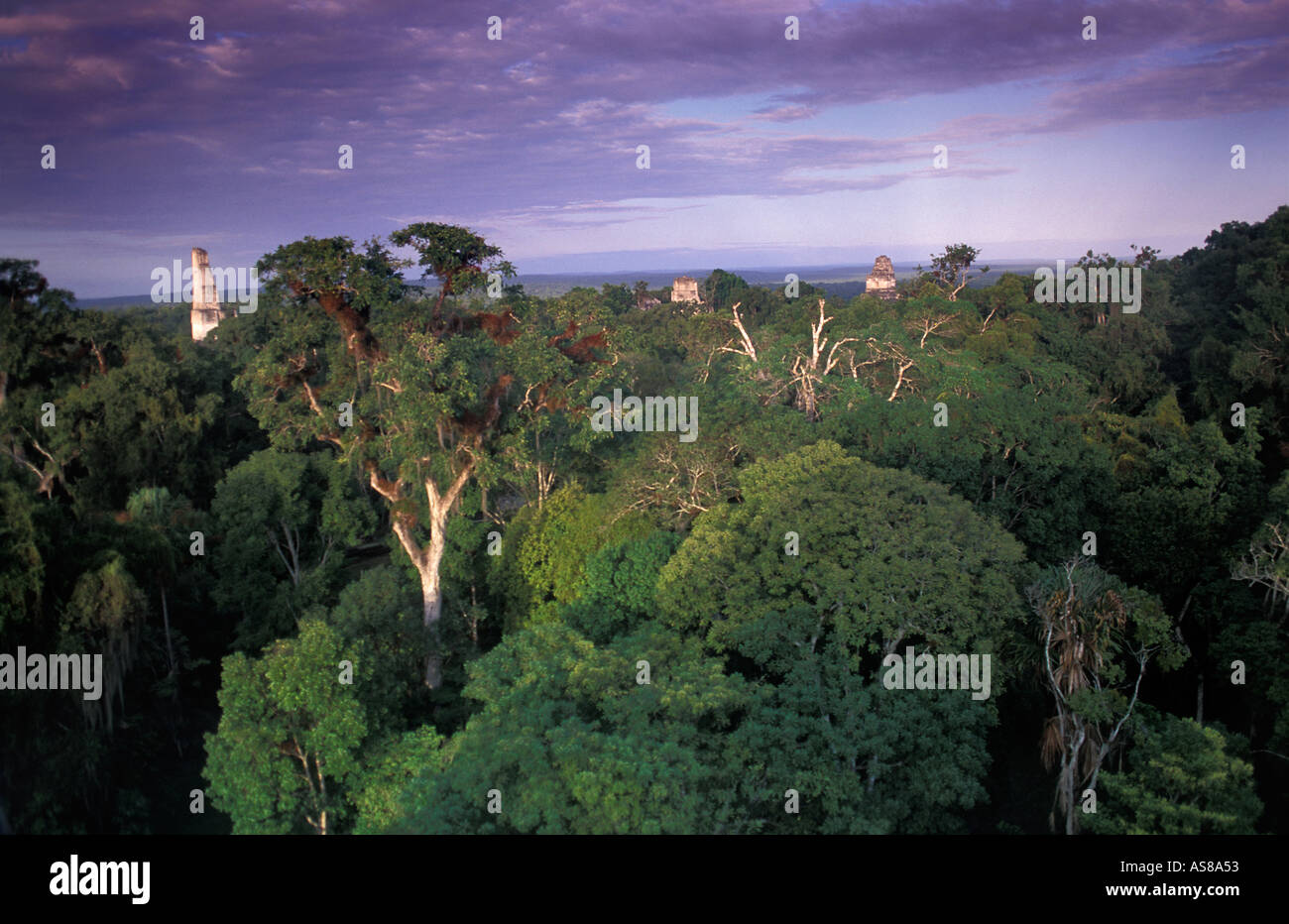 The jungle canopy viewed from the Lost World mundo perdido Tikal El Peten Guatemala Maya ruins - Stock Image