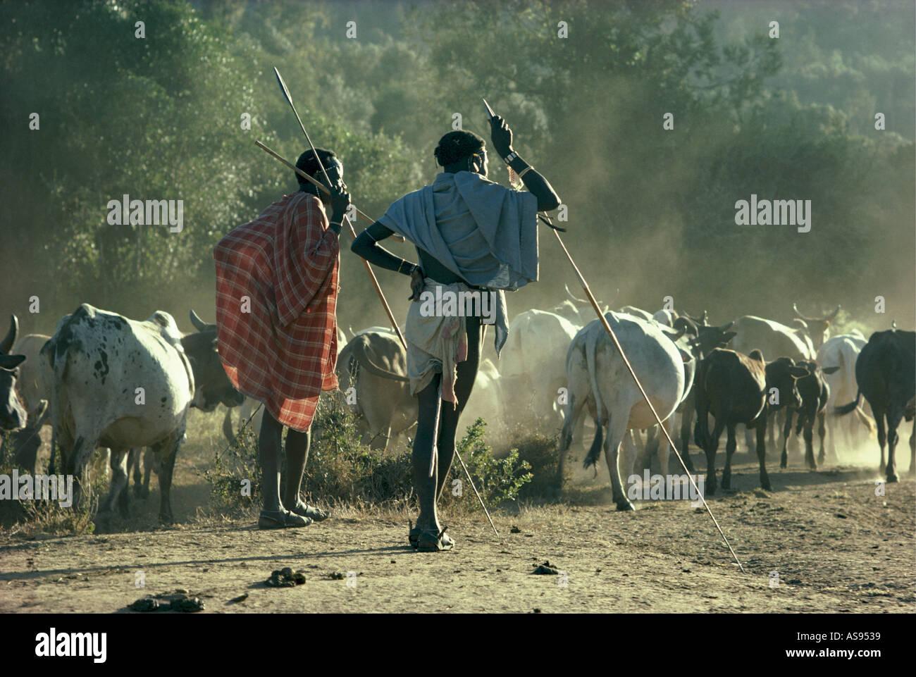 Two Samburu warriors or moran lean on their spears to watch their cattle Maralal Northern Kenya East Africa - Stock Image