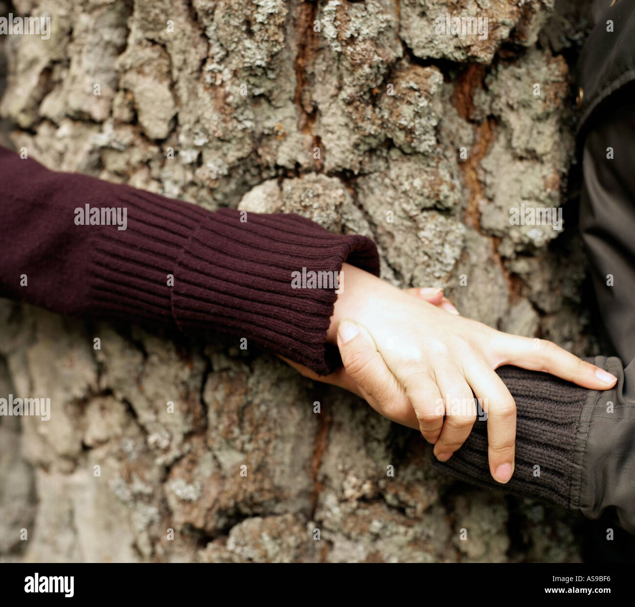hands clasped around a tree - Stock Image