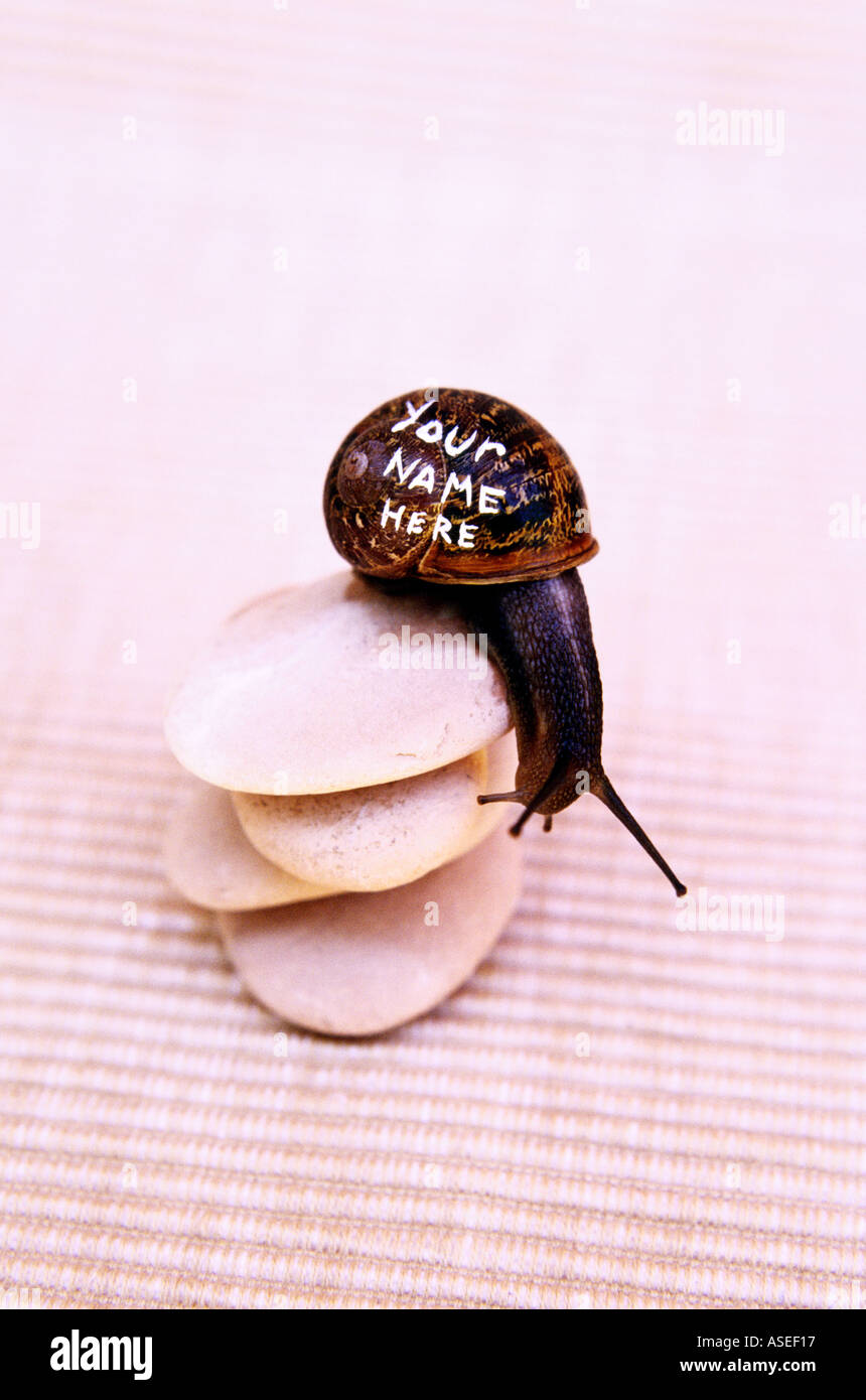 Snail with words your name here painted on the shell like billboard or web advertising on flat pebbles - Stock Image