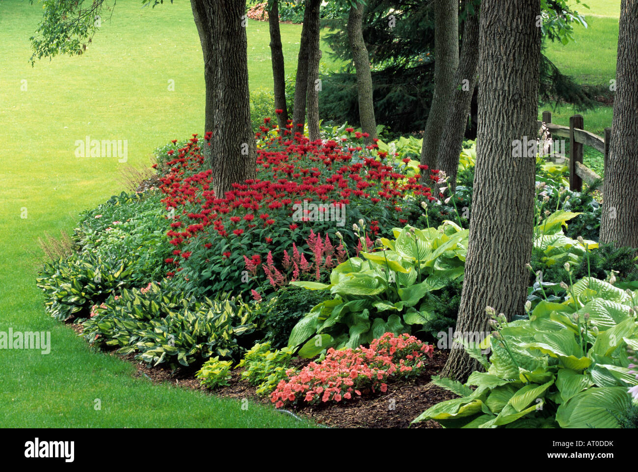 Shade Garden In Minnesota July Hosta Impatiens Astilbe And