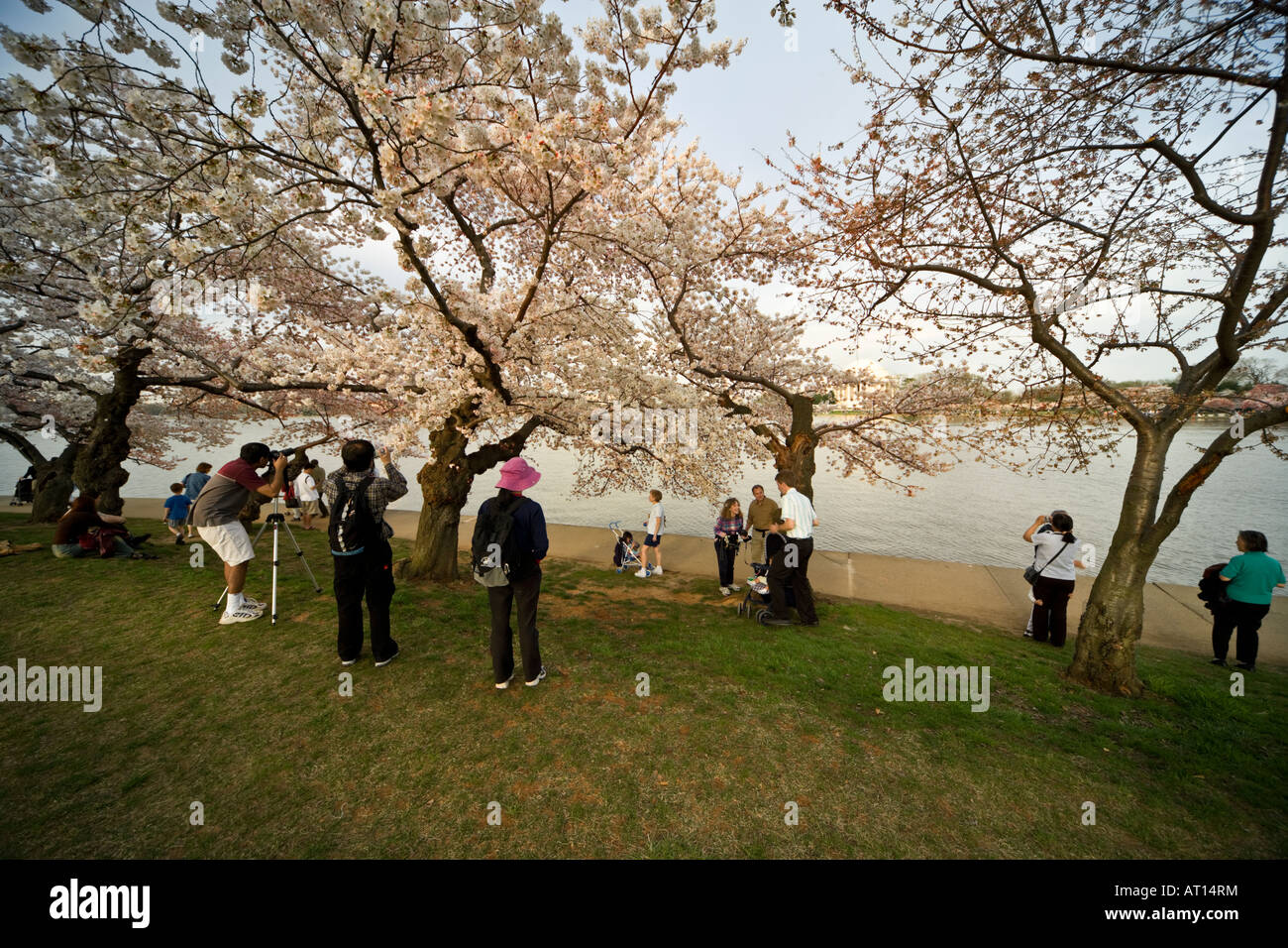 Taking pictures at the National Cherry Blossom Festival in Washington DC. Tidal Basin with Jefferson Memorial in - Stock Image