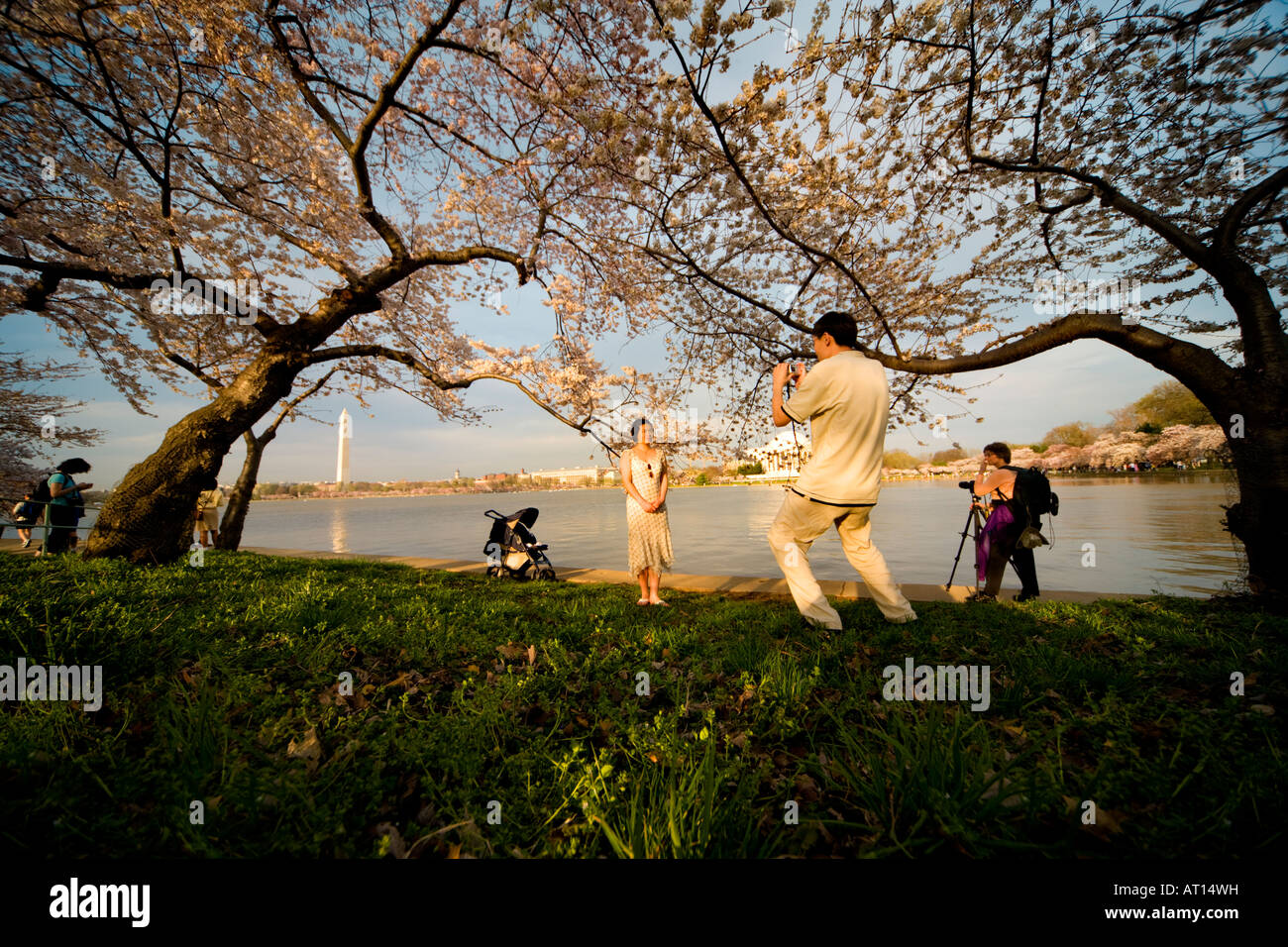 Taking pictures at the National Cherry Blossom Festival in Washington DC. Tidal Basin with Jefferson Memorial in Stock Photo