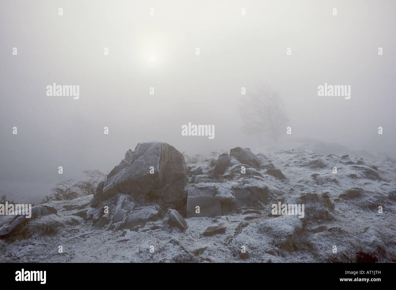 Freezing Fog at Tarn Howes - Stock Image
