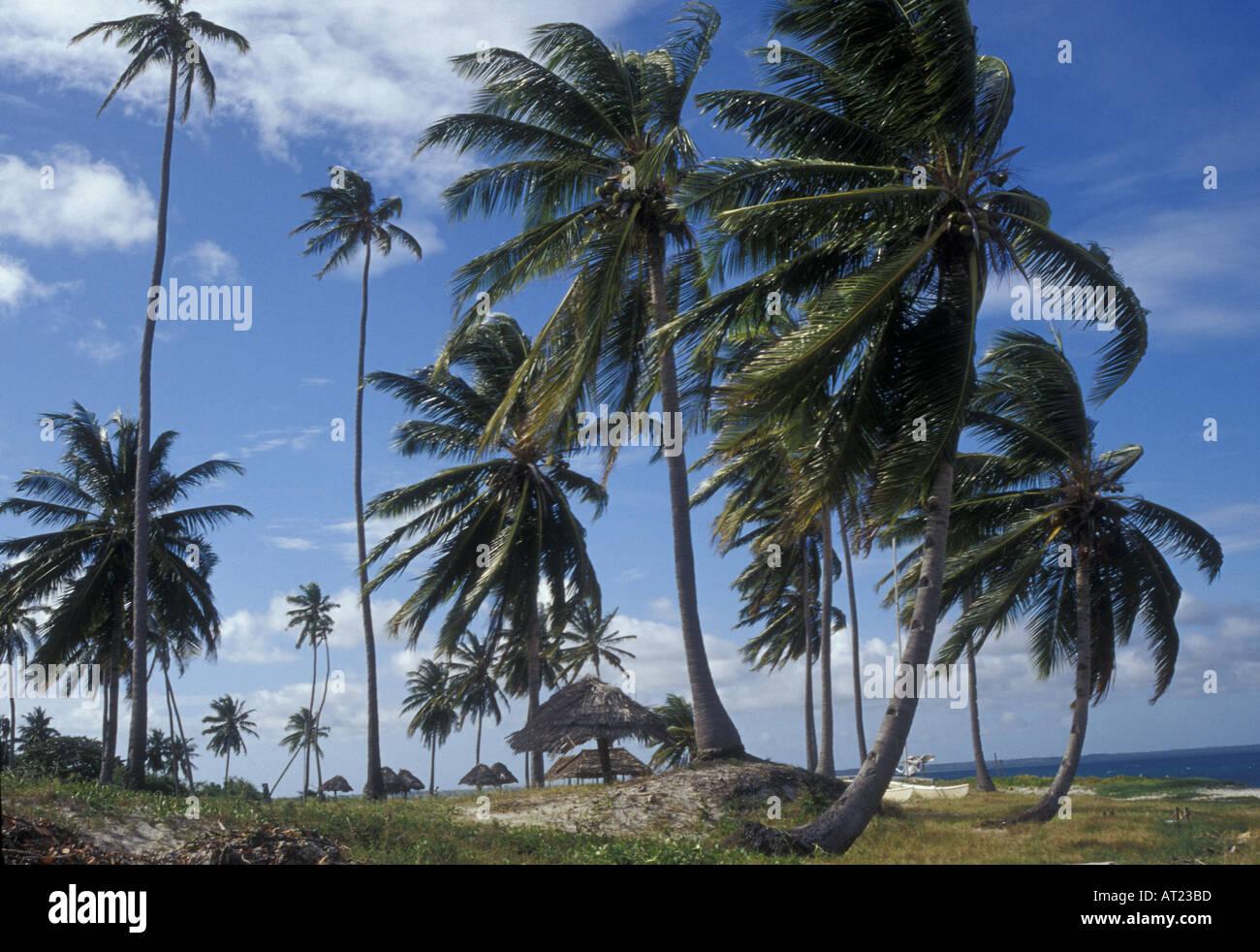 Mafia Island scene with coconut palms - Stock Image