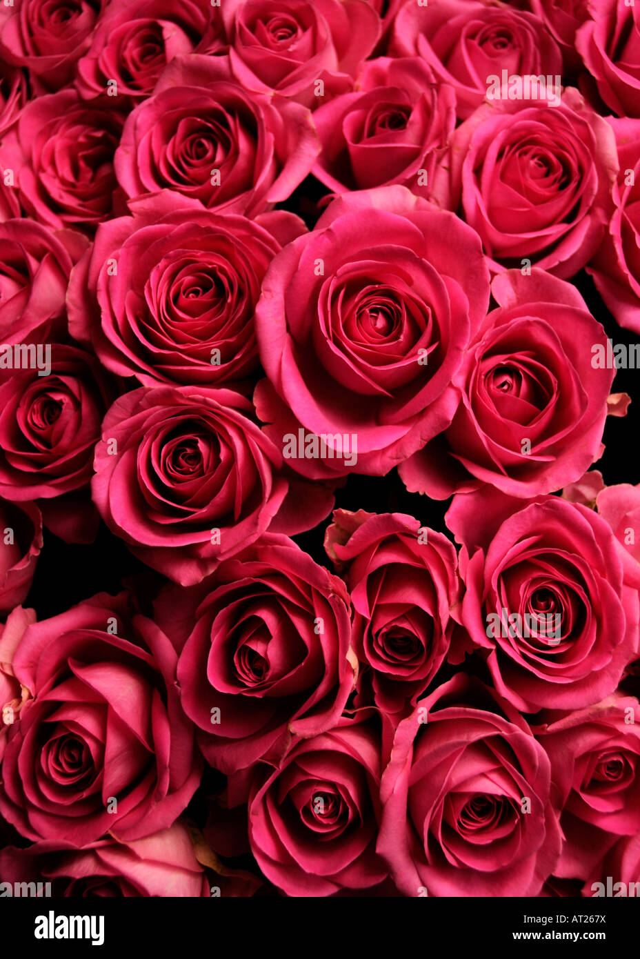 bouquet of red roses - Stock Image