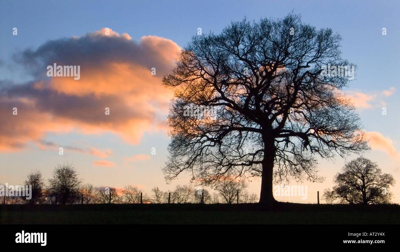 Trees in winter sunset, Chilterns, Buckinghamshire, UK - Stock Image