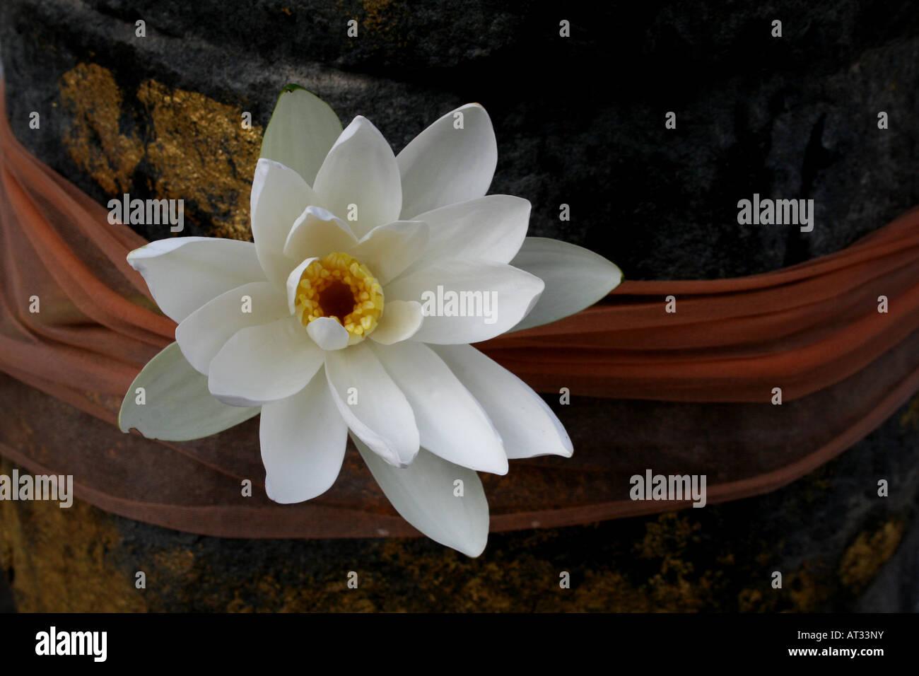 Flower Offering Mahabodhi temple , Bodhgaya , Bihar , India - Stock Image