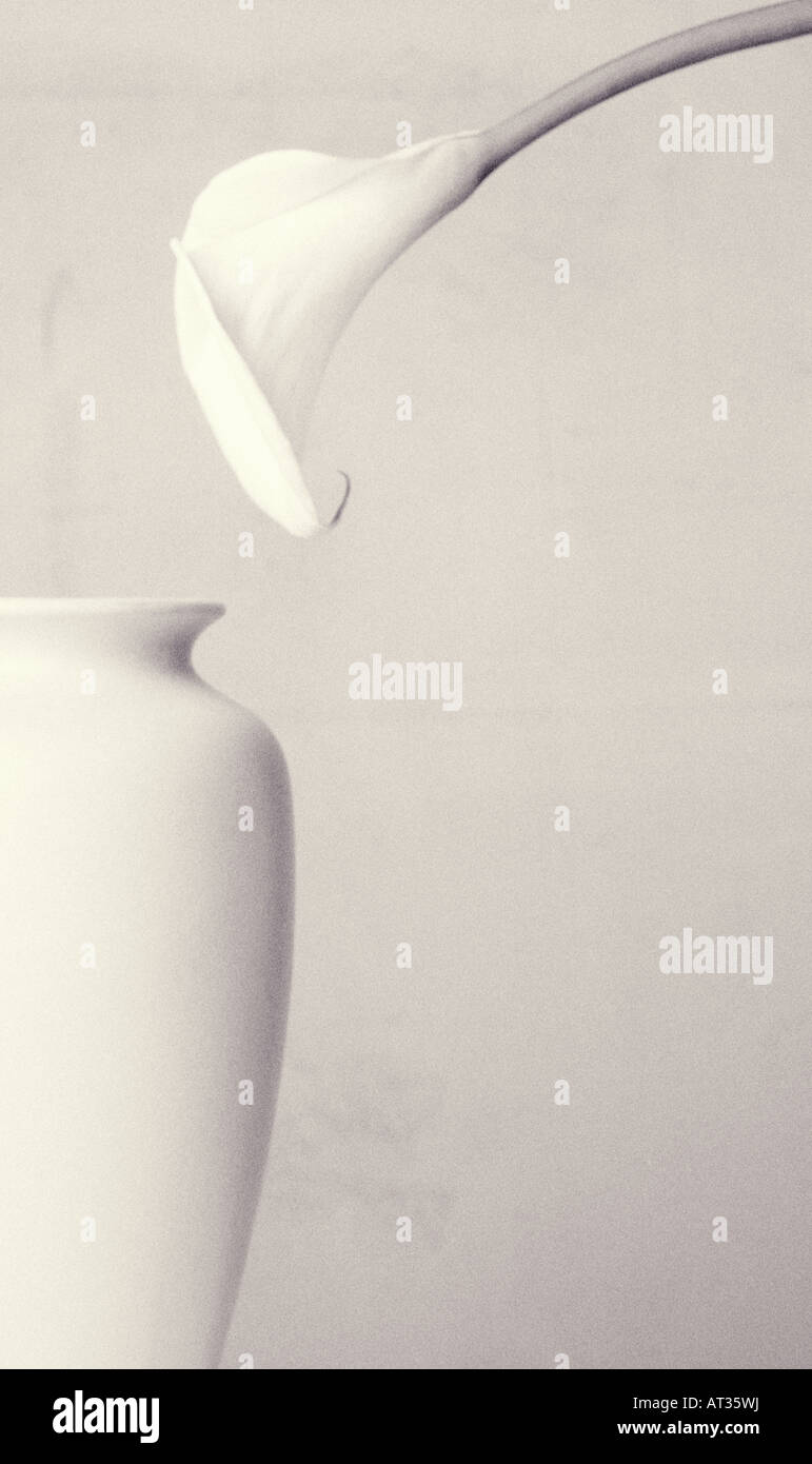 A lily and vase - Stock Image