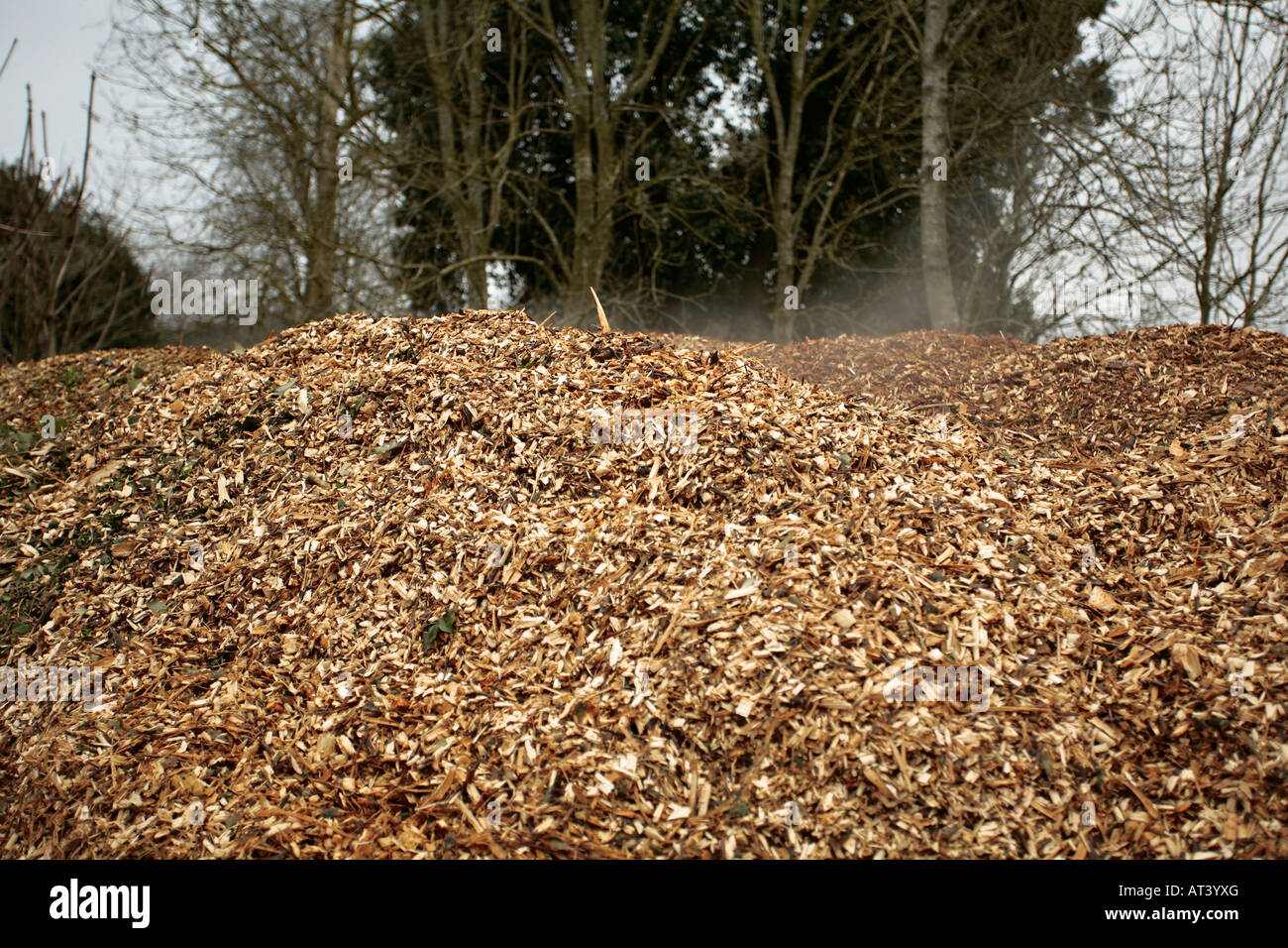 Smoking compost heap made from leaves and grass clippings - Stock Image
