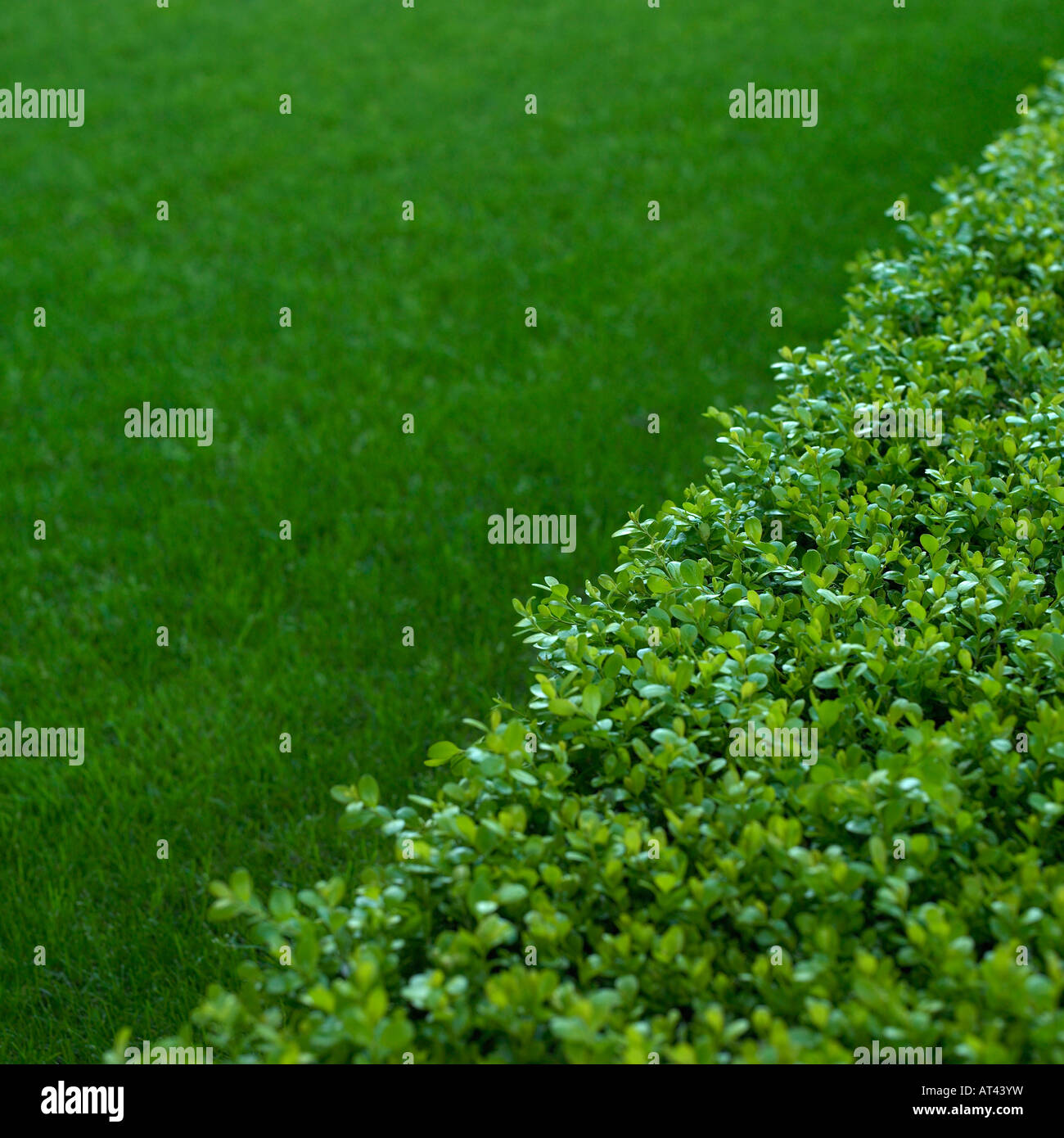 hedge and grass - Stock Image