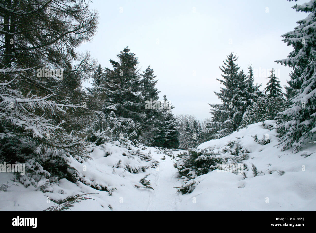 Winter landscape beautiful snow in the forest - Stock Image