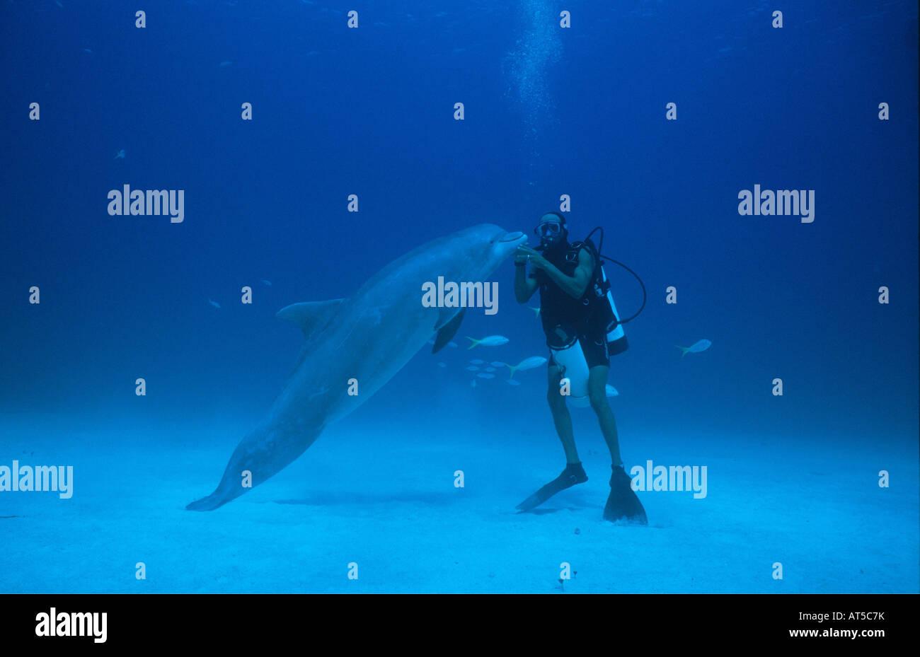 zoology, mammal / mammalian, dolphin (Delphinidae), Grand Bahama, Bahamas, diver with dolphin, Additional-Rights - Stock Image