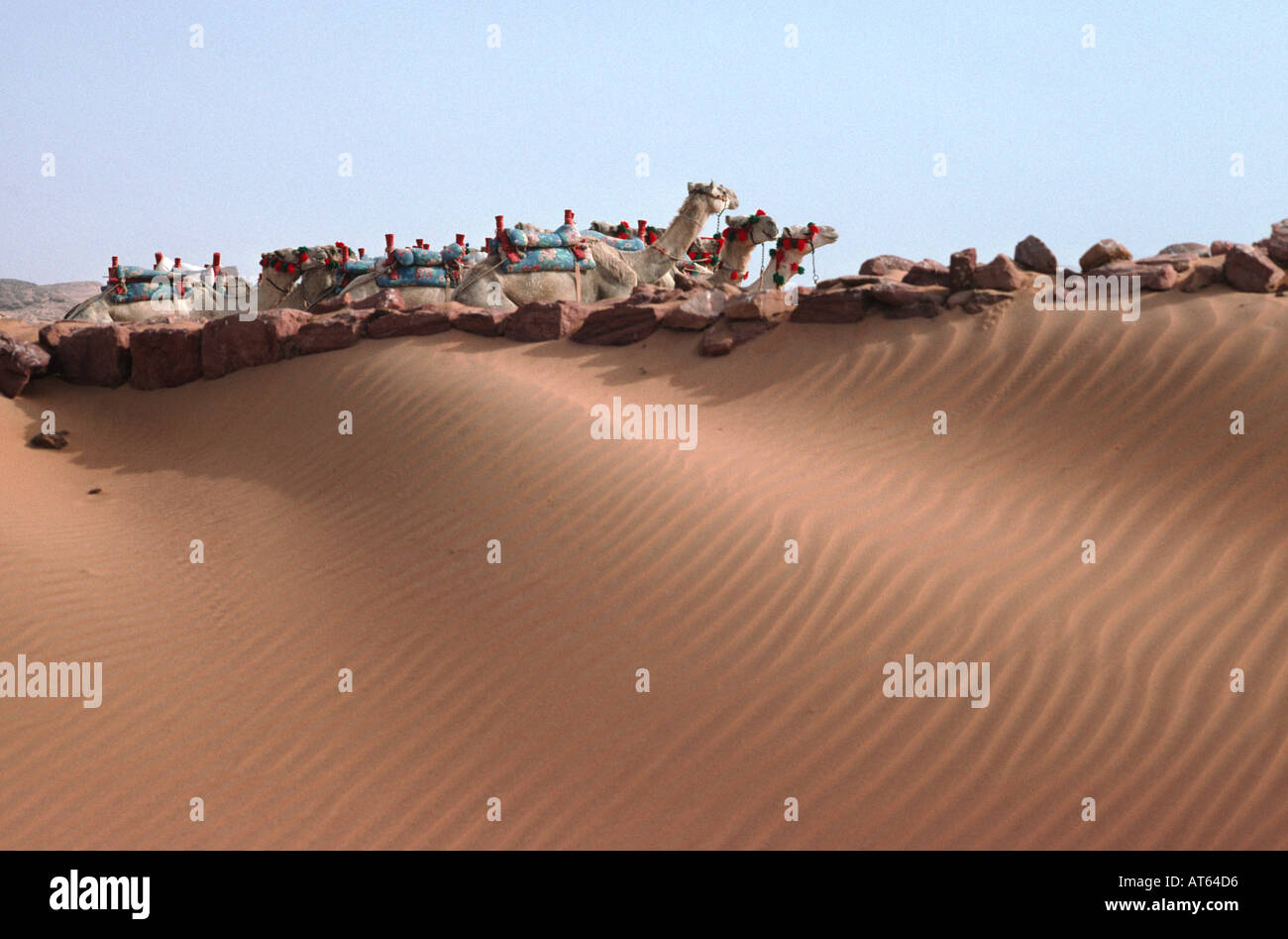 Camels in the Desert. Wadi al-Sebua, New Sebua, Upper Egypt, Egypt. - Stock Image