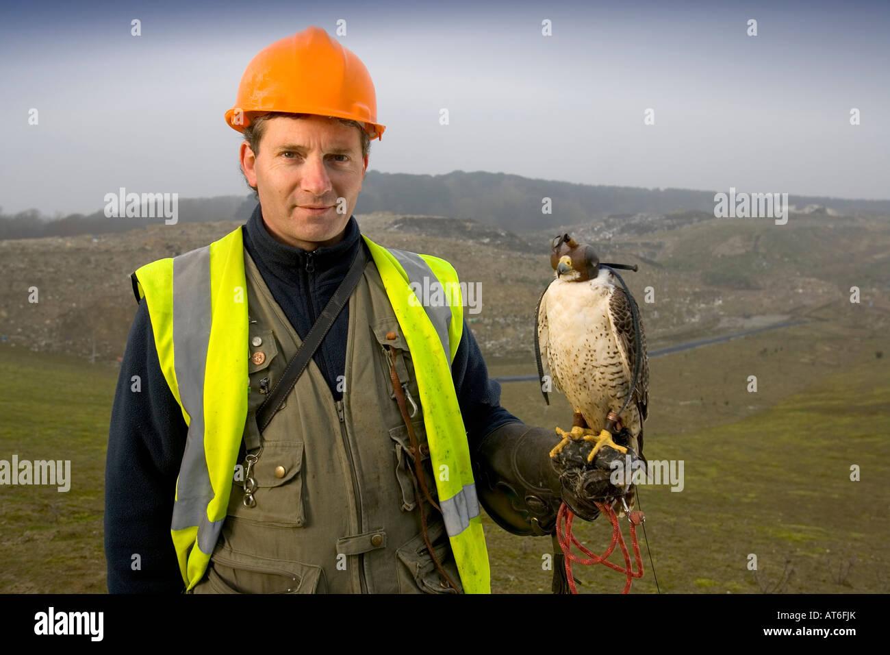 Falconer Gary D'Aquitaine, Lyn Bottom rubbish tip, Isle of Wight, England, UK, Great Britain - Stock Image