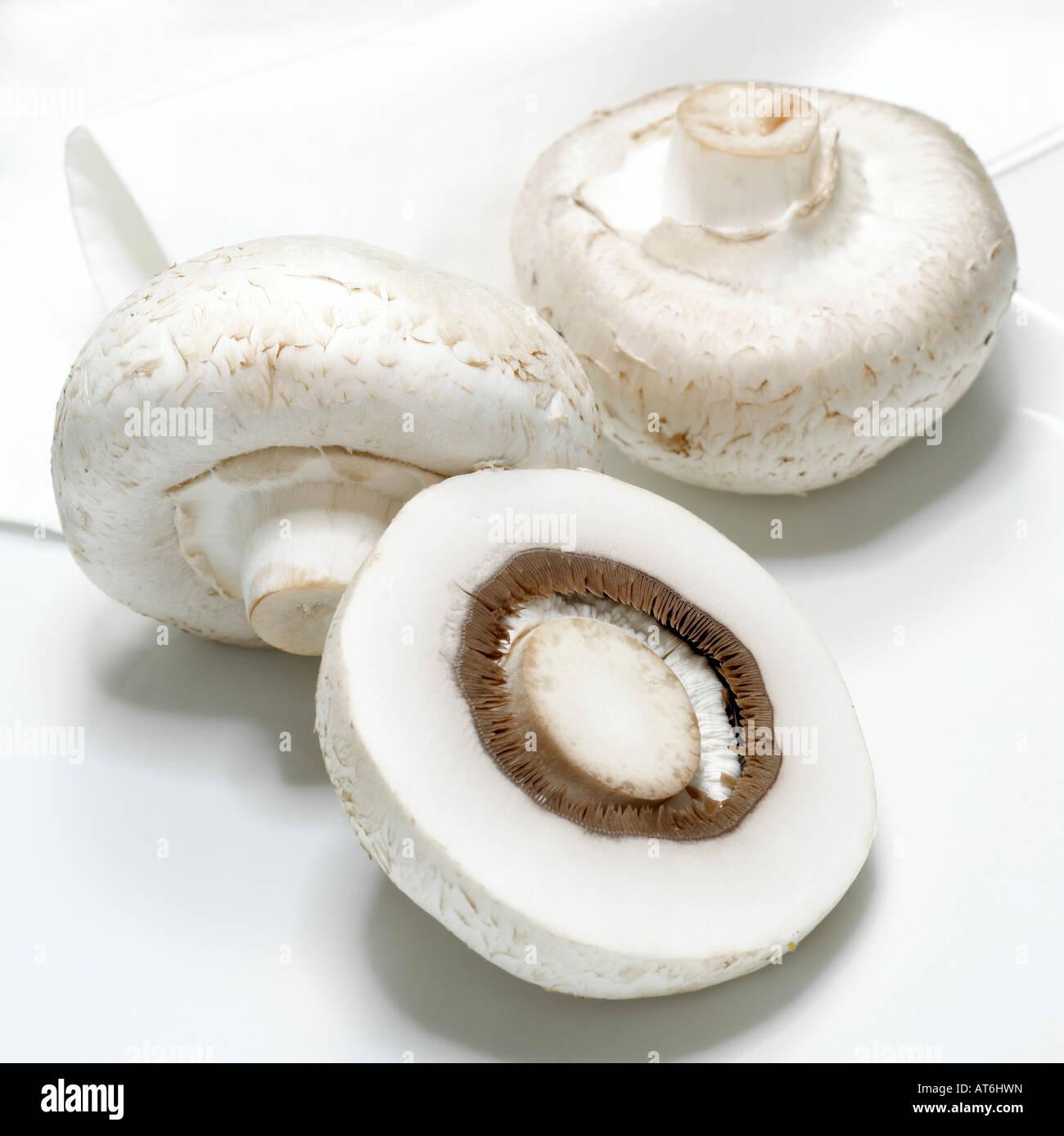 White mushrooms, close-up - Stock Image