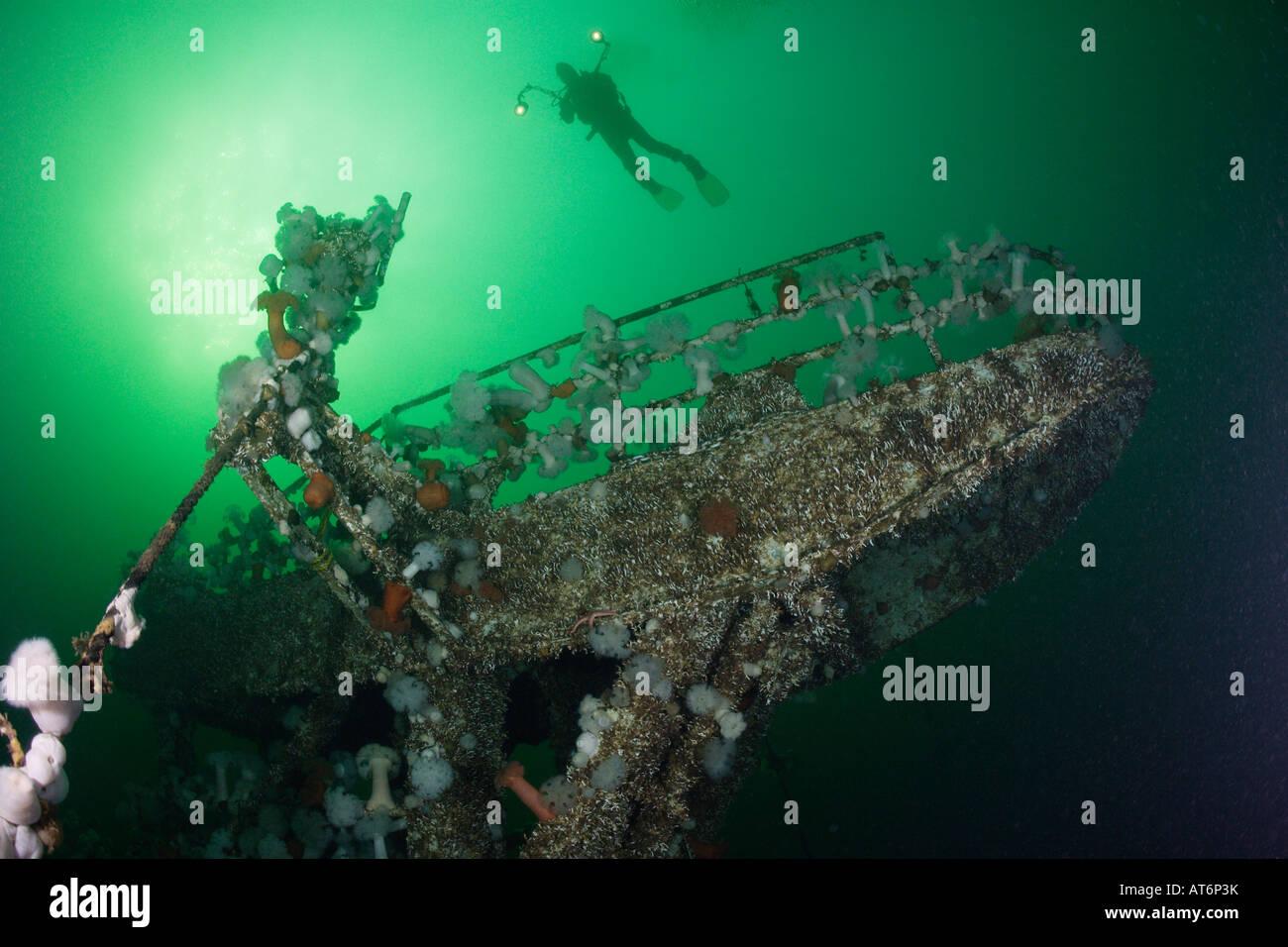 nx0322. scuba diver (model released) explores HMCS Saskatchewan shipwreck.British Columbia, Canada. Photo Copyright - Stock Image