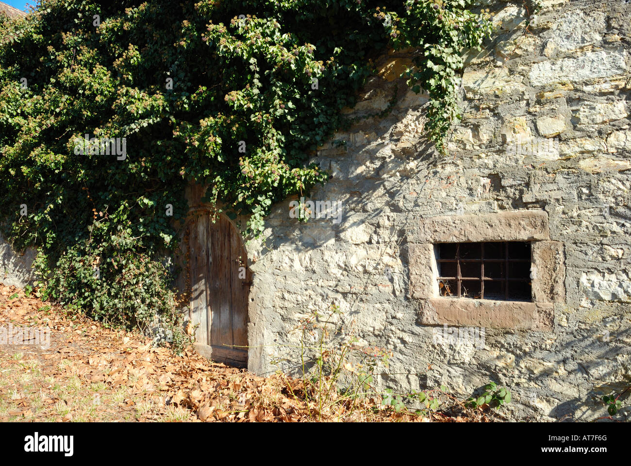 Wooden door in ancient medieval mediaeval stone wall framed window plants poson ivy hanging dead leaves ground nature - Stock Image