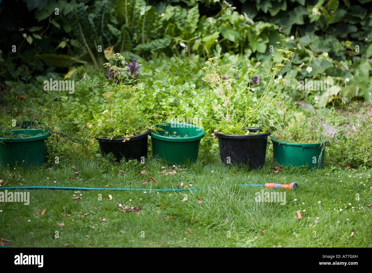 Hosepipe and plant pots - Stock Image