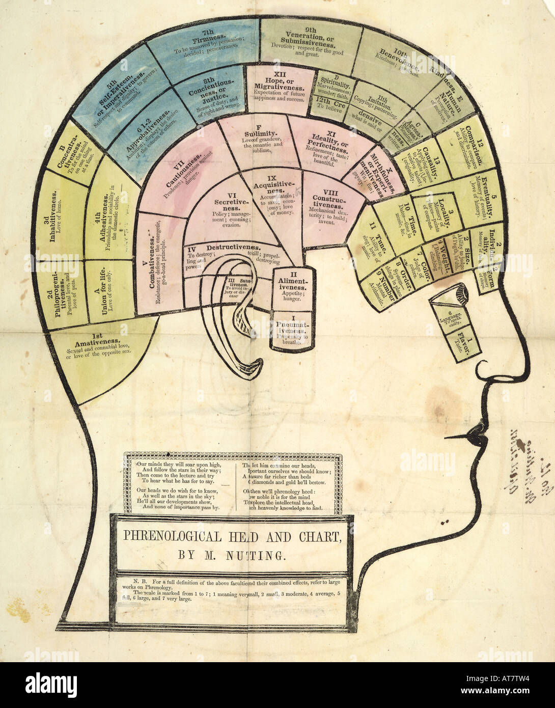 Antique Illustration Of The Regions Of The Brain And Phrenology