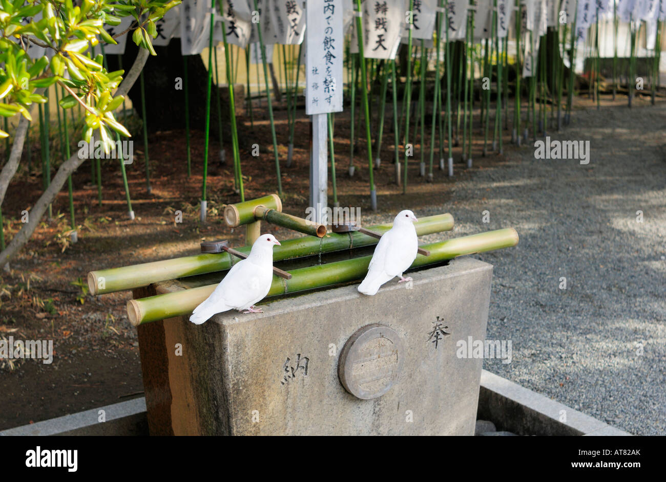 Two White Pigeons sitting on Purification Fountain - Stock Image