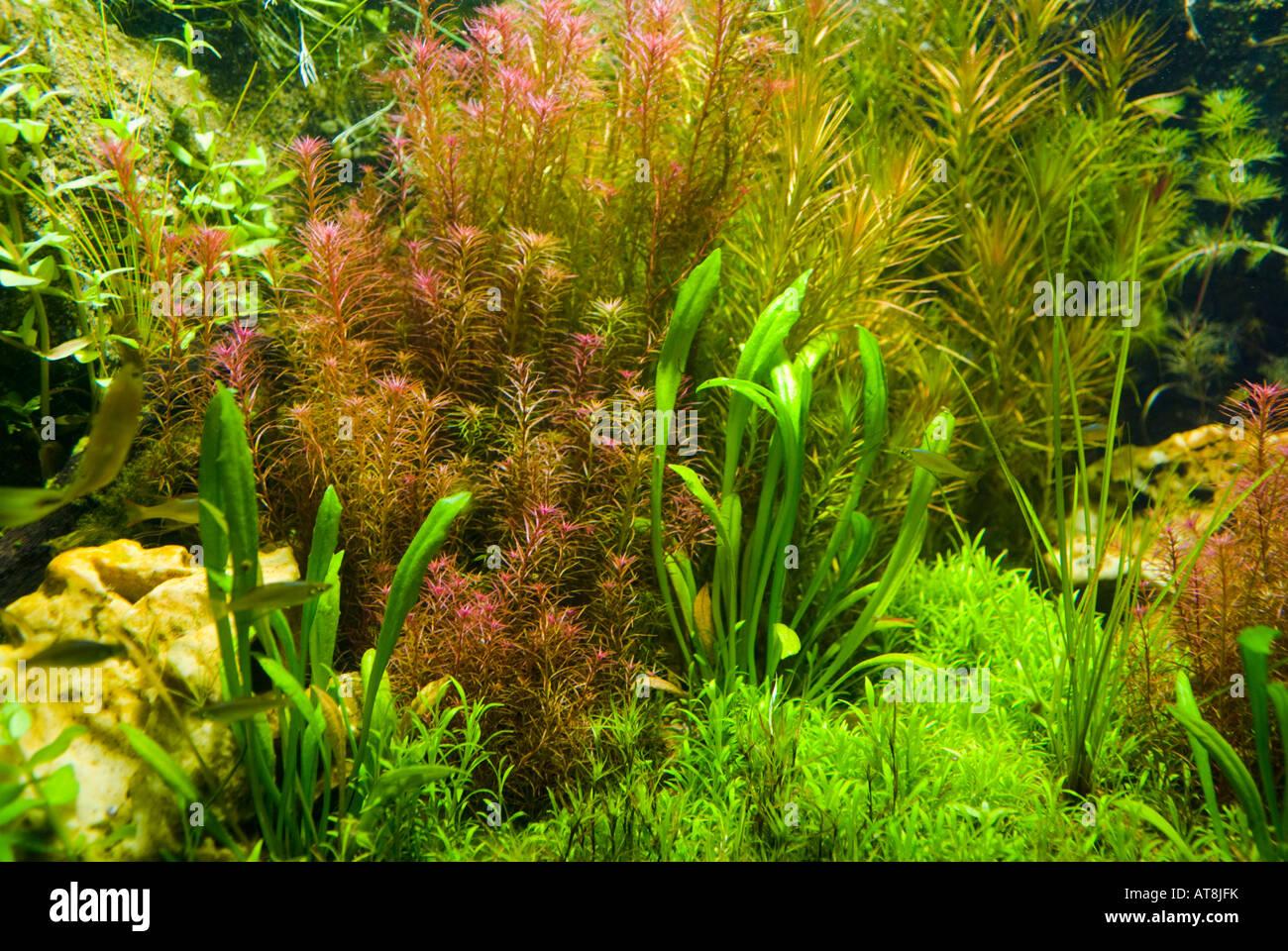background of freshwater aquarium plants stock photo