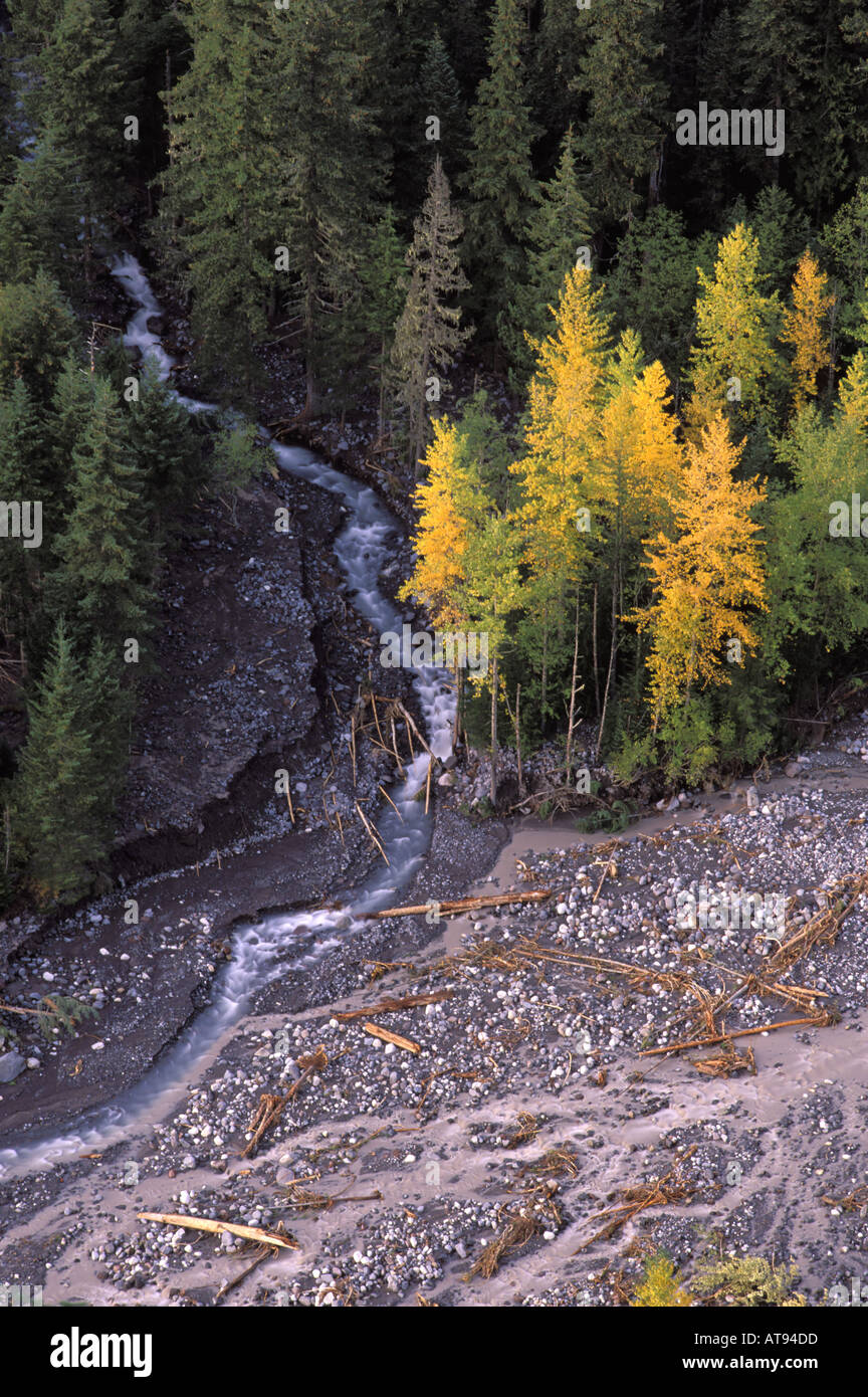 Van Trump Creek joins Nisqualie River in forested valley bottom from Rucksecker Point Mount Rainier National Park Stock Photo