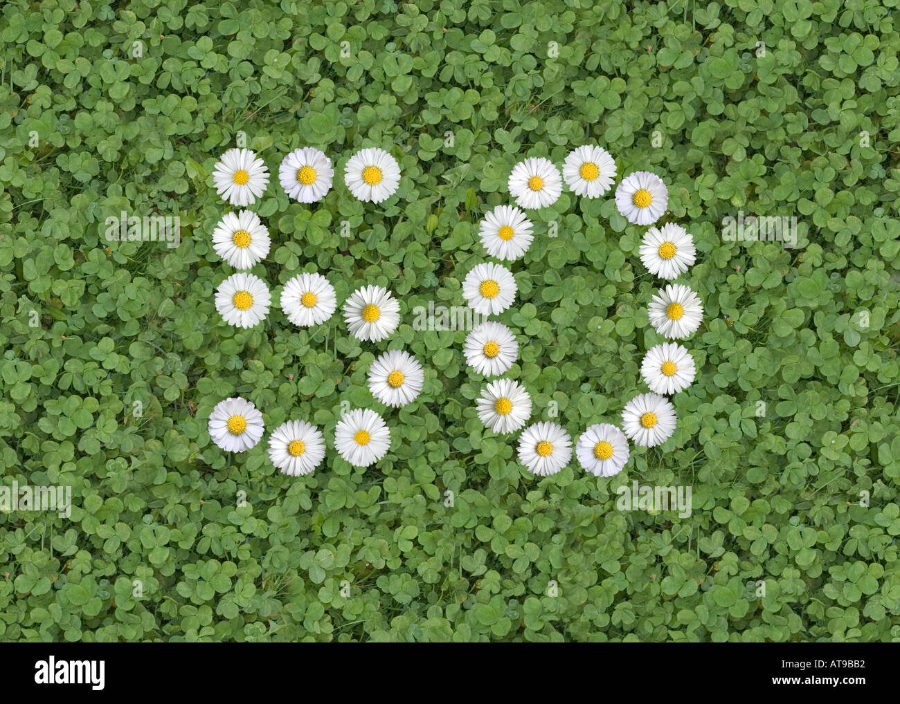 words signs numbers written with daisies - Stock Image