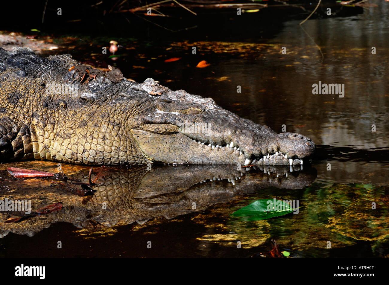 Crocodile at Everglades Wonder Gardens Bonita Springs Florida Stock ...