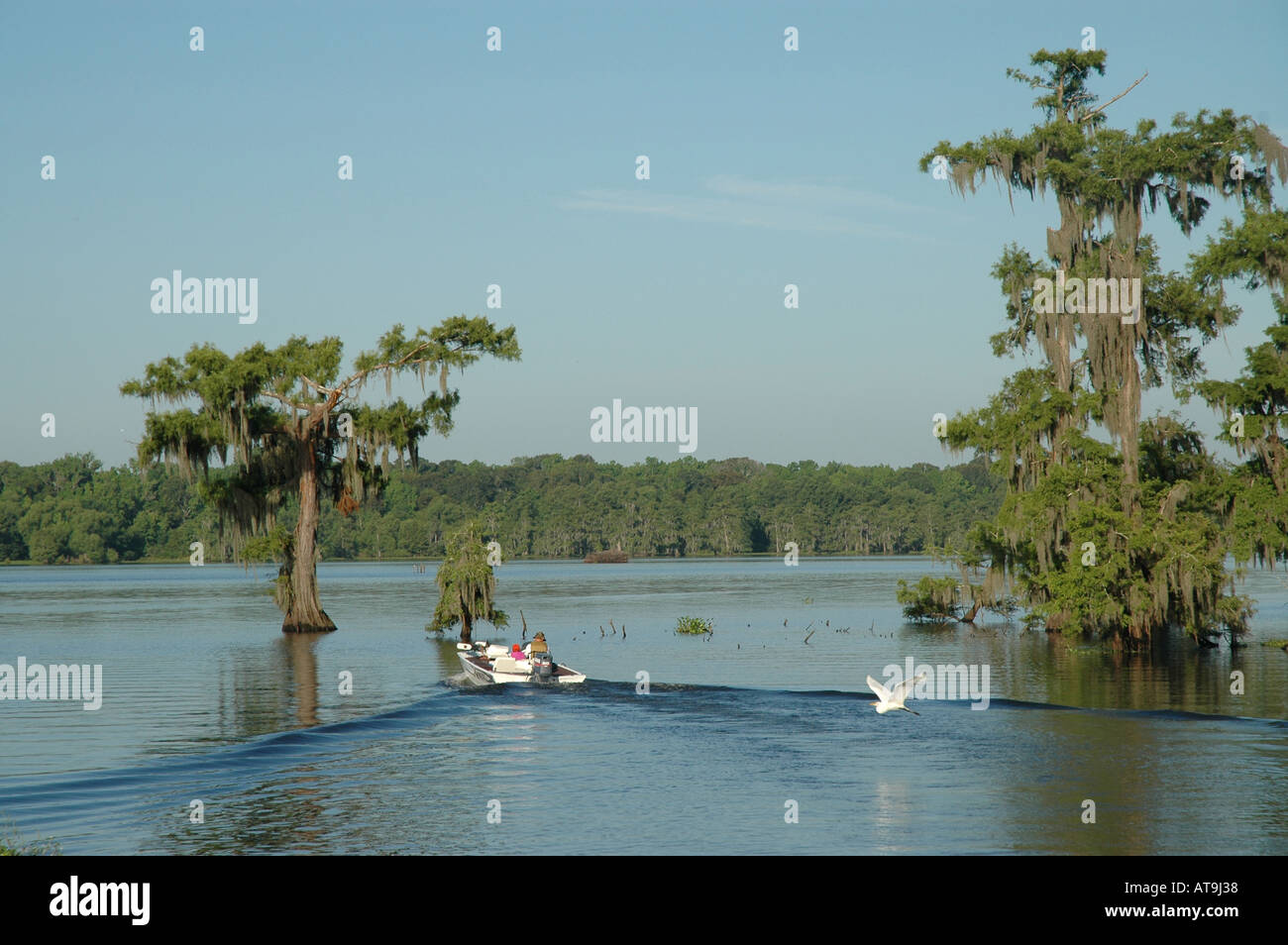 bass fishing boat passing cypress trees in lake with spanish