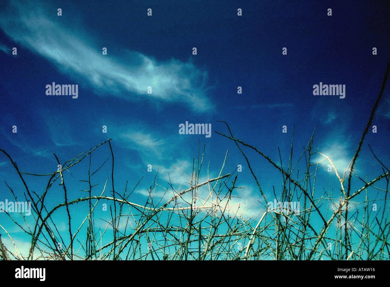 thorns - Stock Image