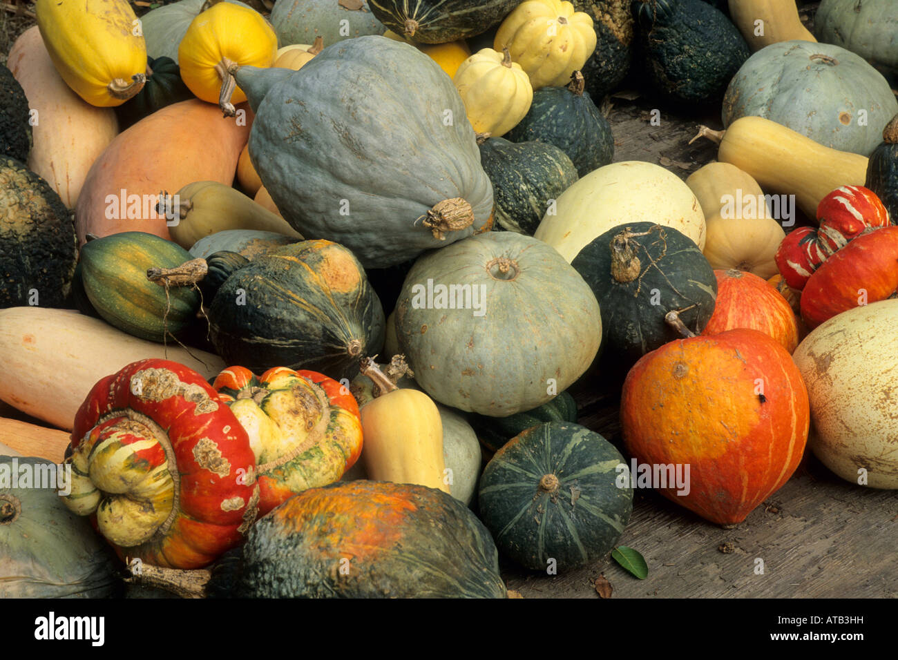 Gourds Gowans Oak Tree produce stand near Philo Anderson Valley Mendocino County California - Stock Image