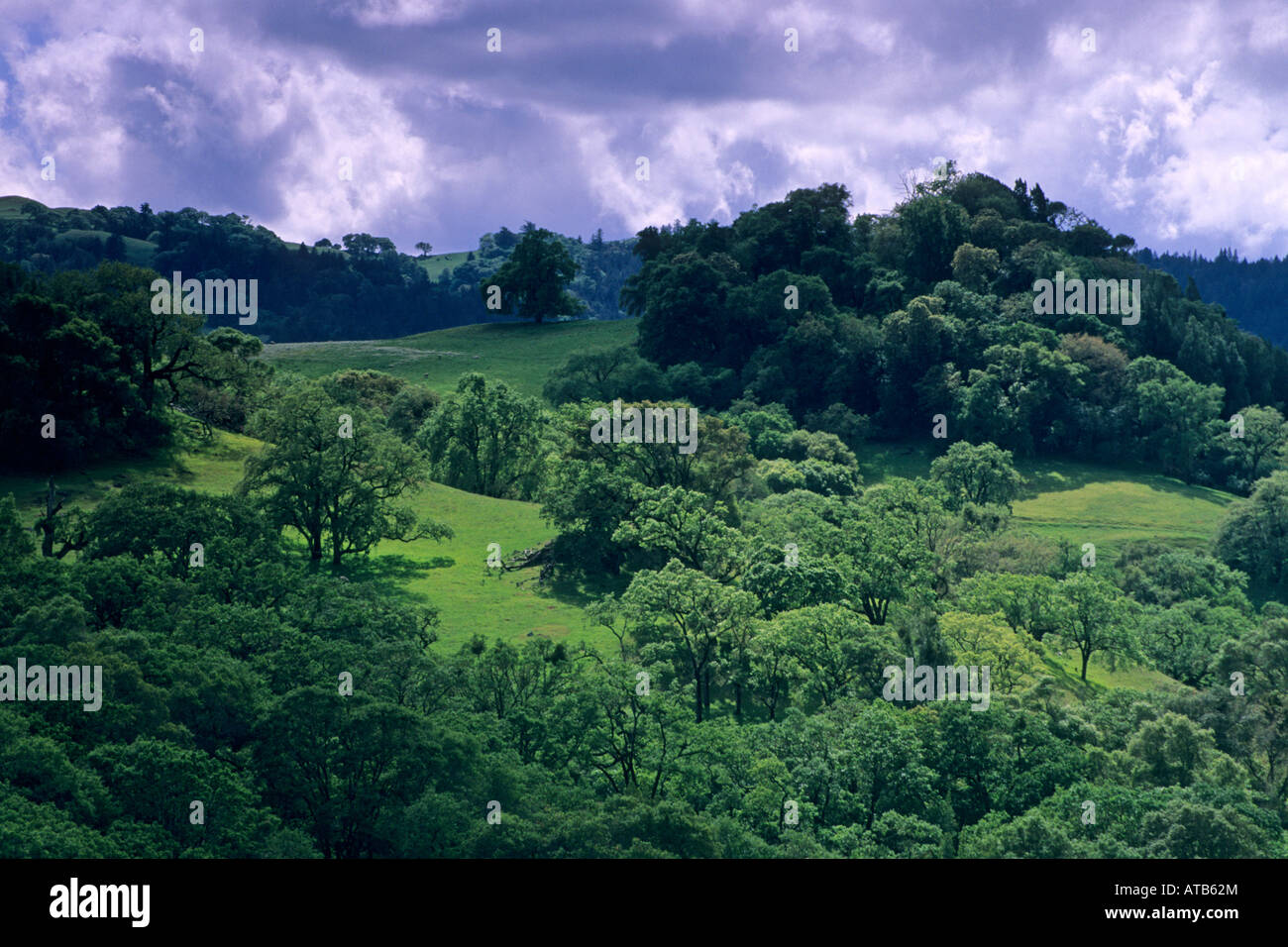 Oak trees and green grass hills in spring above Booneville and the Anderson Valley Mendocino County California - Stock Image