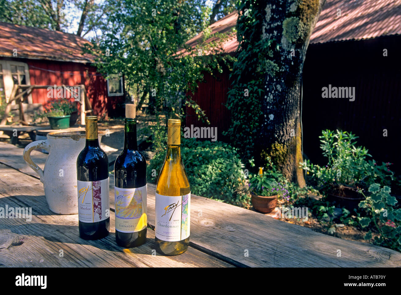 Wine bottles with jug under the shadow of a tree at daytime Frey ...