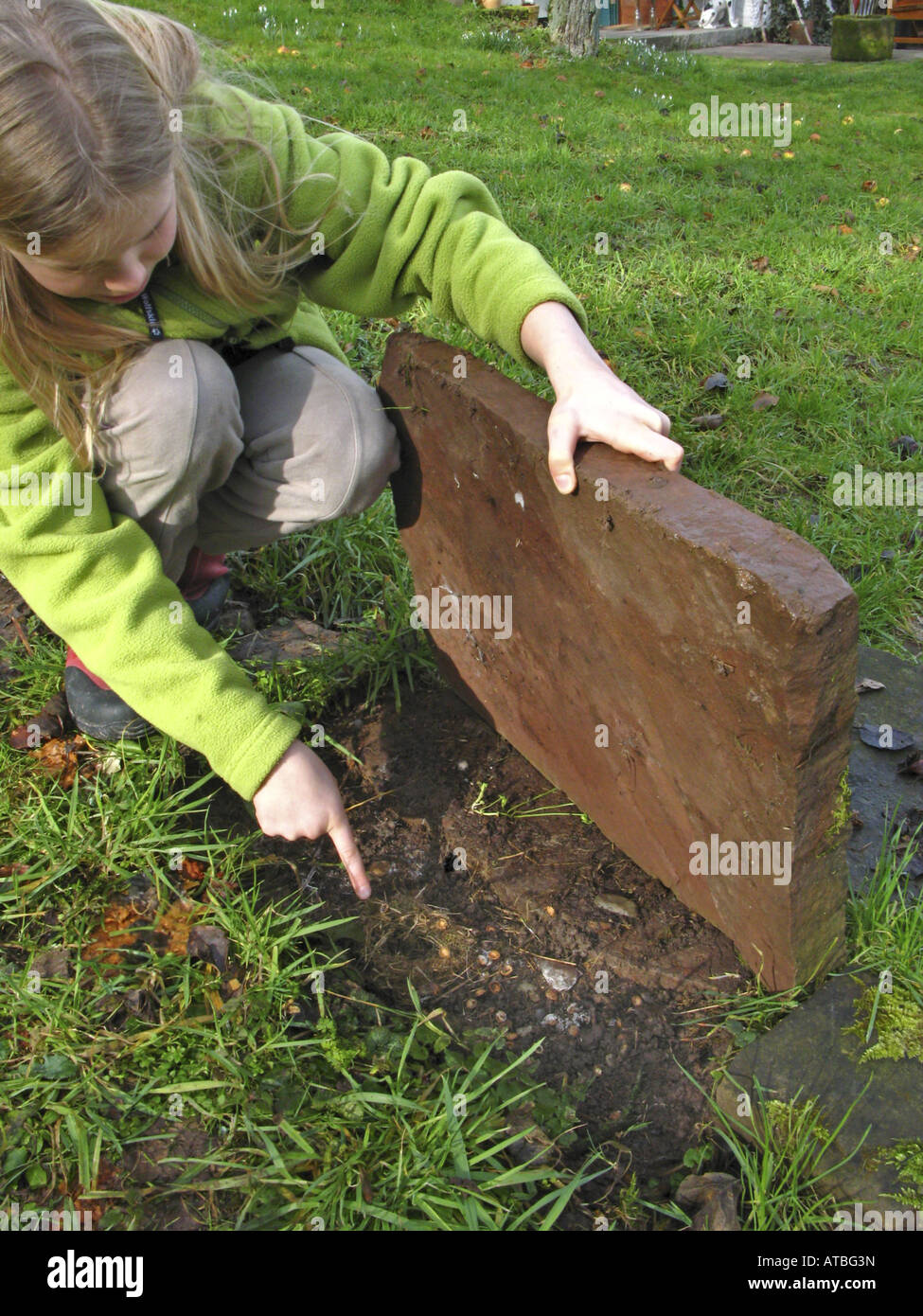 girl searching for animals under a stone plate - Stock Image