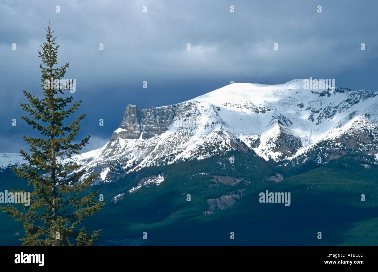 Mount Tekarra 2 693 m Maligne Range Jasper NP Alberta Kanada Canada - Stock Image