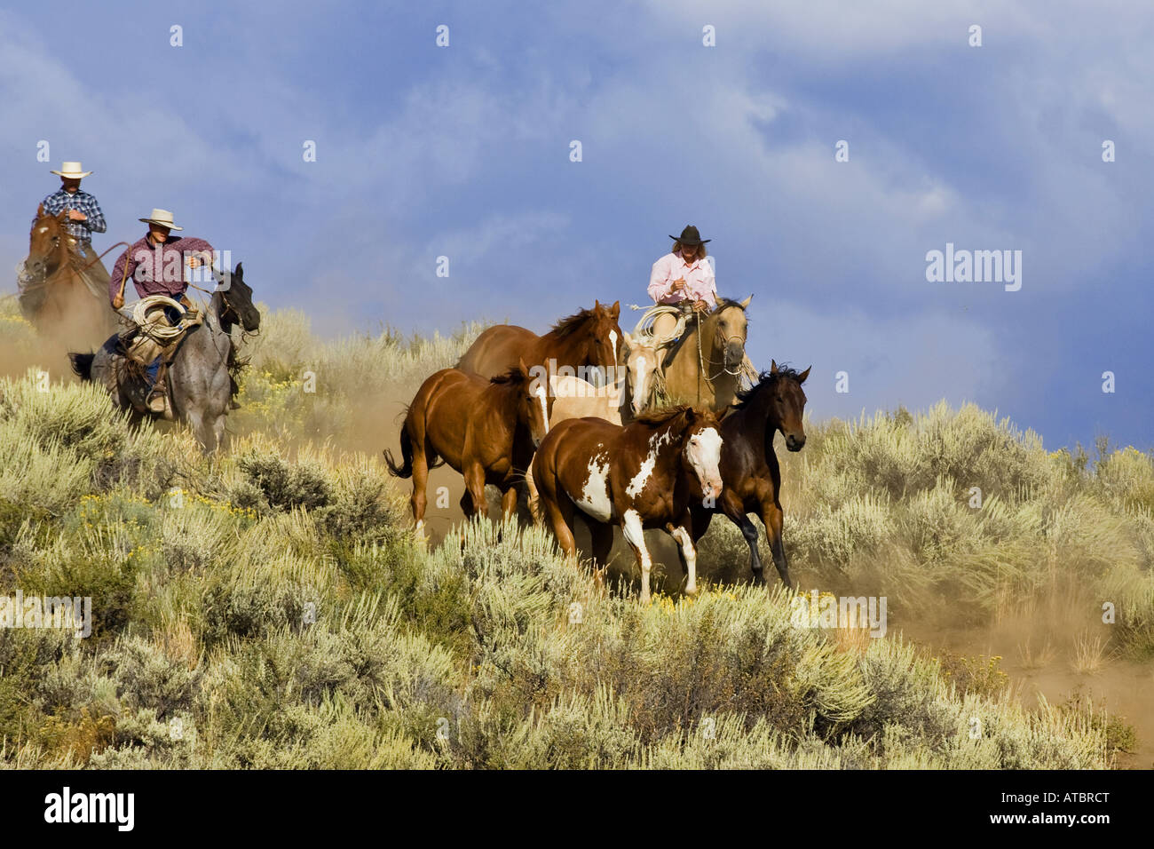 cowgirl and cowboys with horses, USA, Oregon Stock Photo
