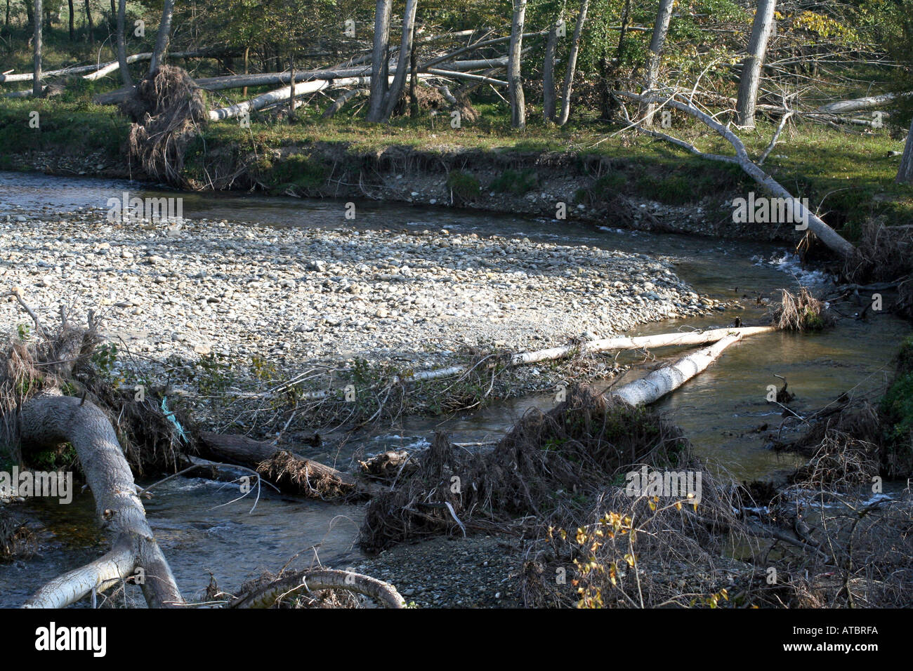 After the storm uprooted trees in the riverbed. - Stock Image