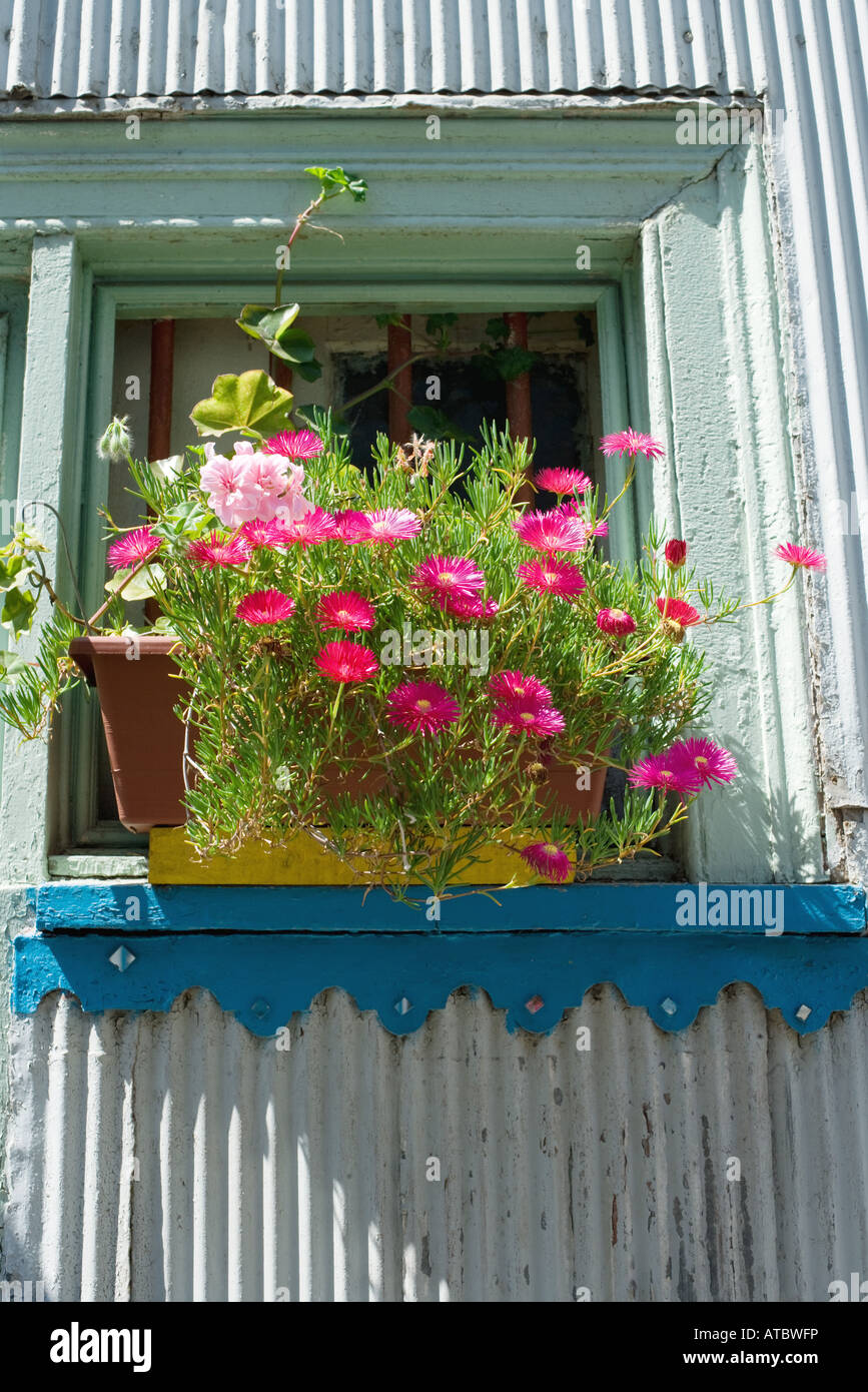 Flowers growing in window box, low angle view - Stock Image