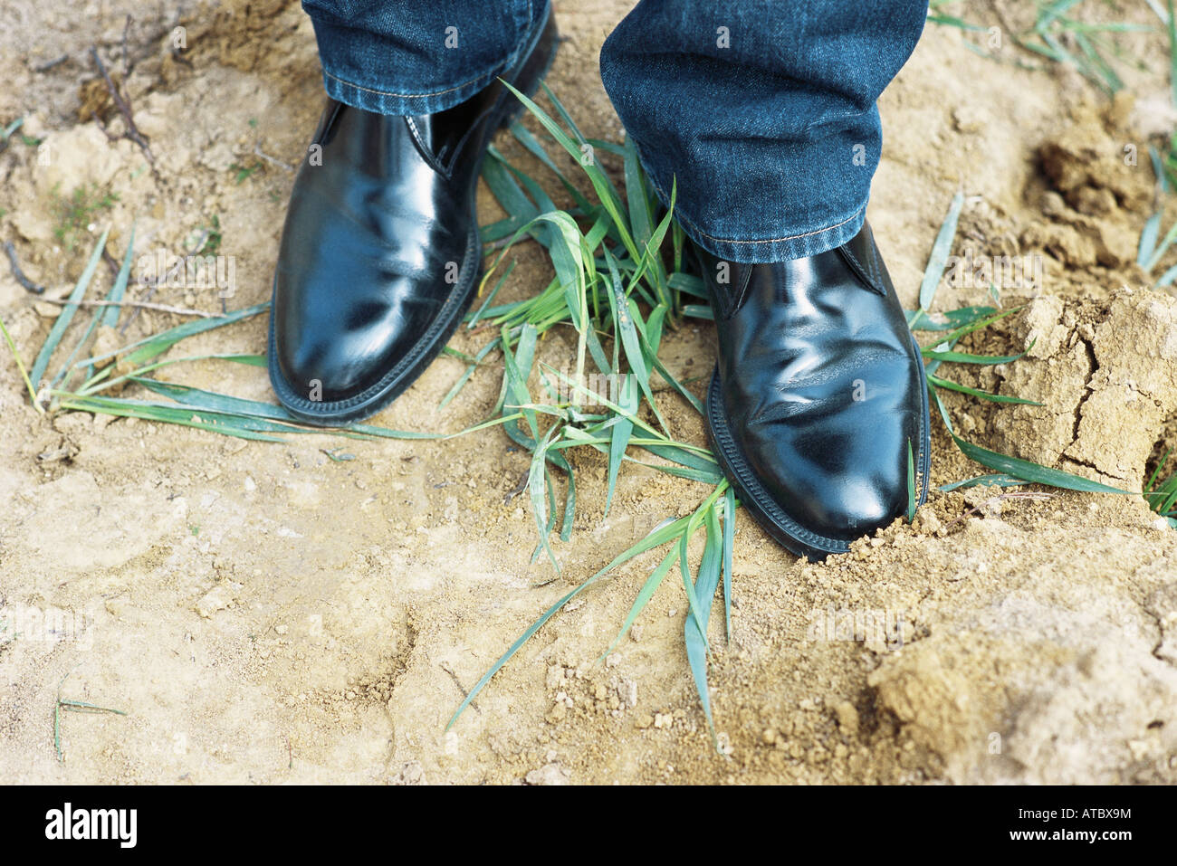 Person wearing black dress shoes standing on top of grass, cropped view - Stock Image