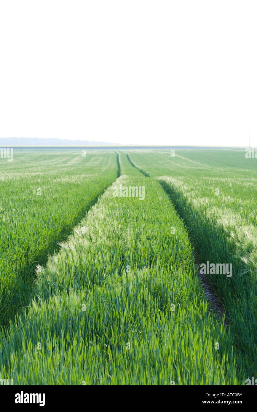 Tire tracks in field of grass, horizon in distance - Stock Image