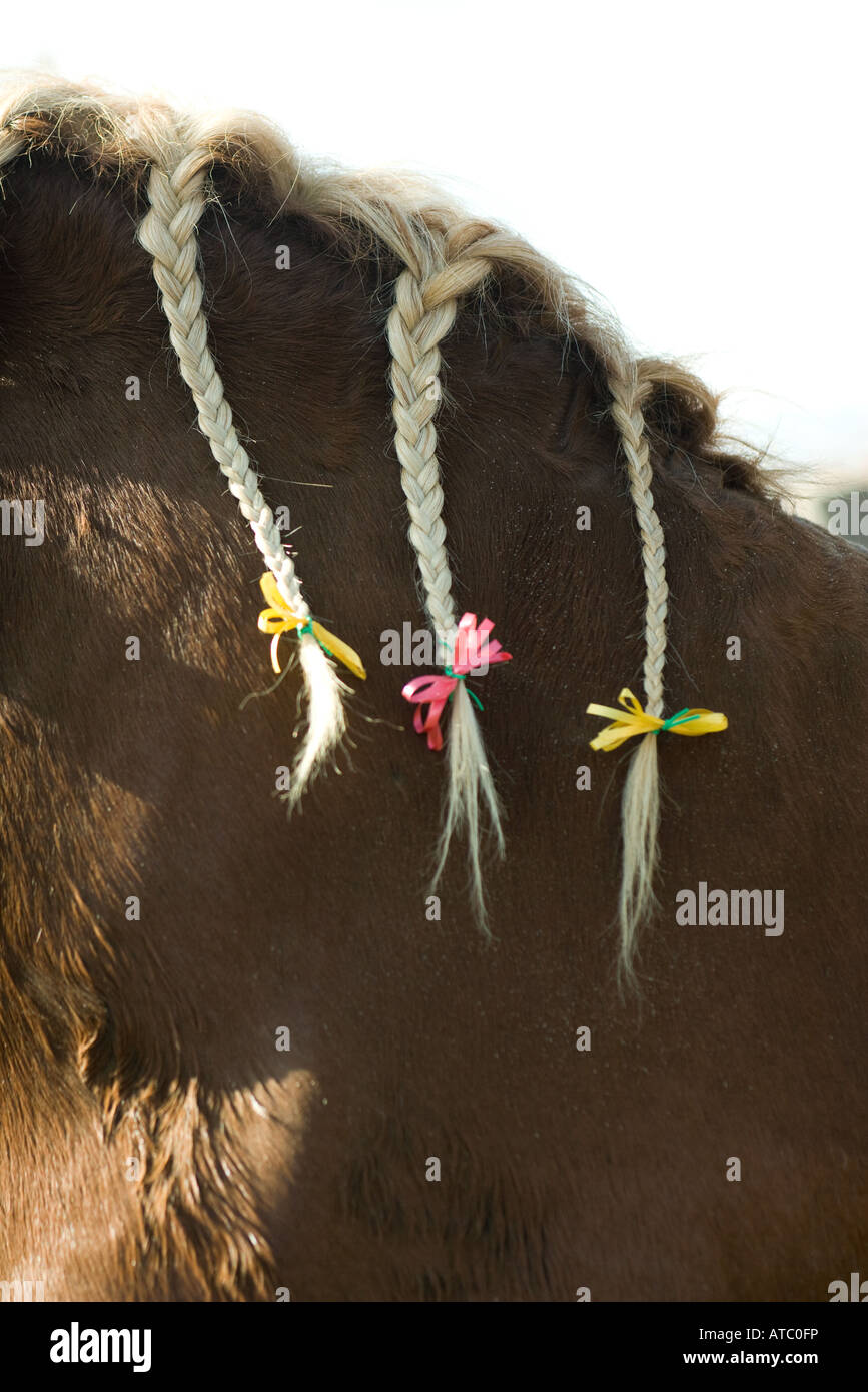 Horse with braided mane and ribbons, cropped view - Stock Image