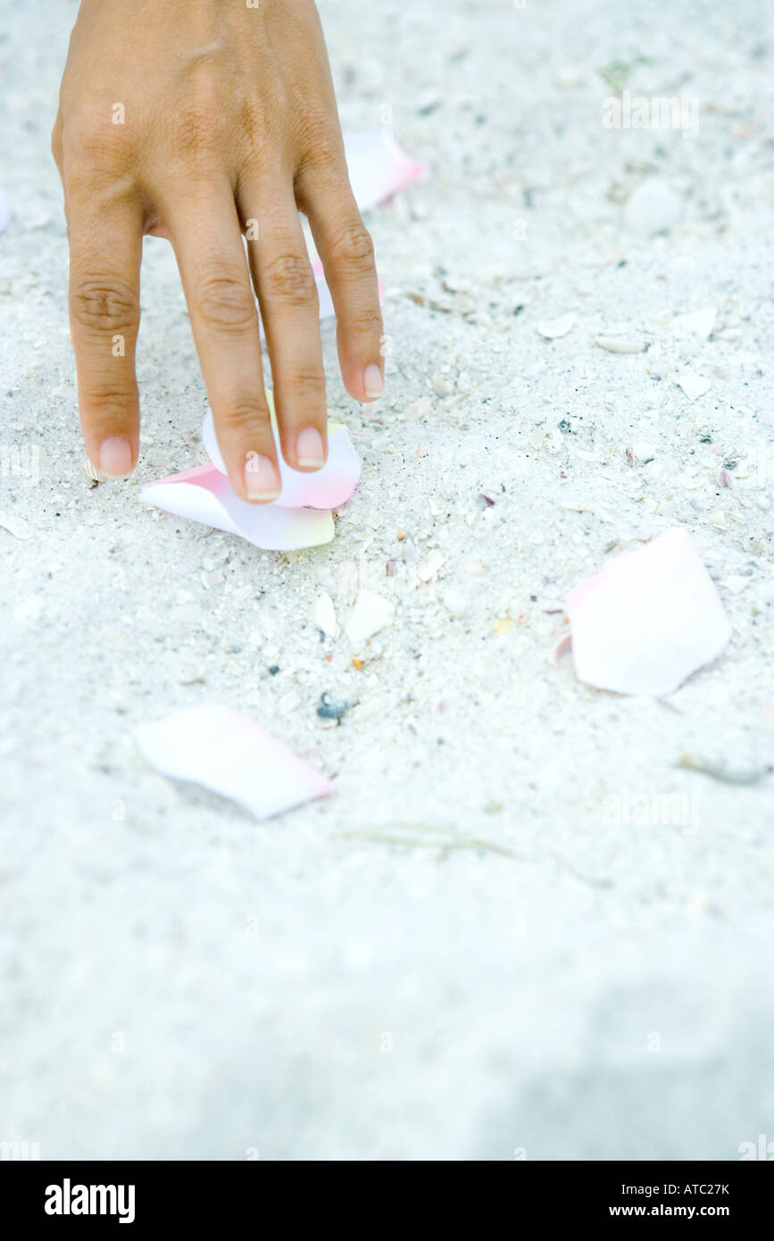 Hand touching petals scattered on sand, close-up - Stock Image