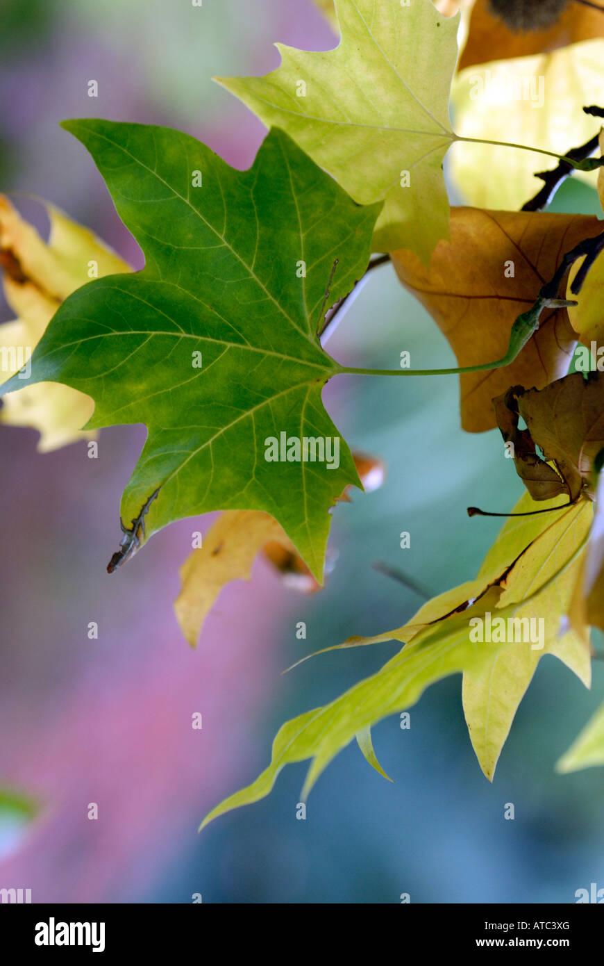 Seasons autumn fall season seasons greetings stock photos seasons beautiful autumnal colours in woodland seasonal leaves in colourful setting in the fall in autumn season m4hsunfo