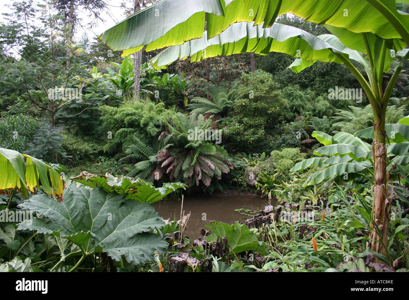 HORTICULTURE. SUB TROPICAL JUNGLE GARDEN AND POND. THE LOST GARDENS OF  HELIGAN. CORNWALL. UK. EUROPE.