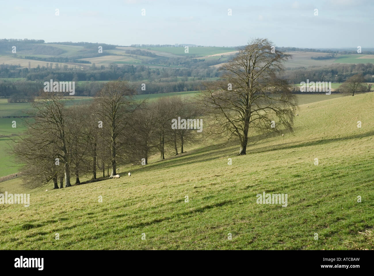 South Downs view - Stock Image